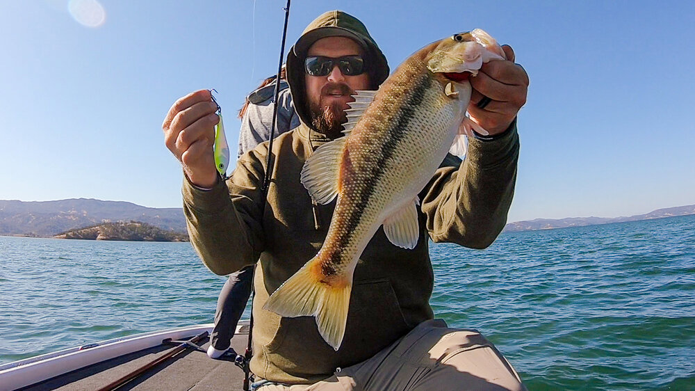 We caught them deep! Swimbait and Spoon Tips For Fall Bass