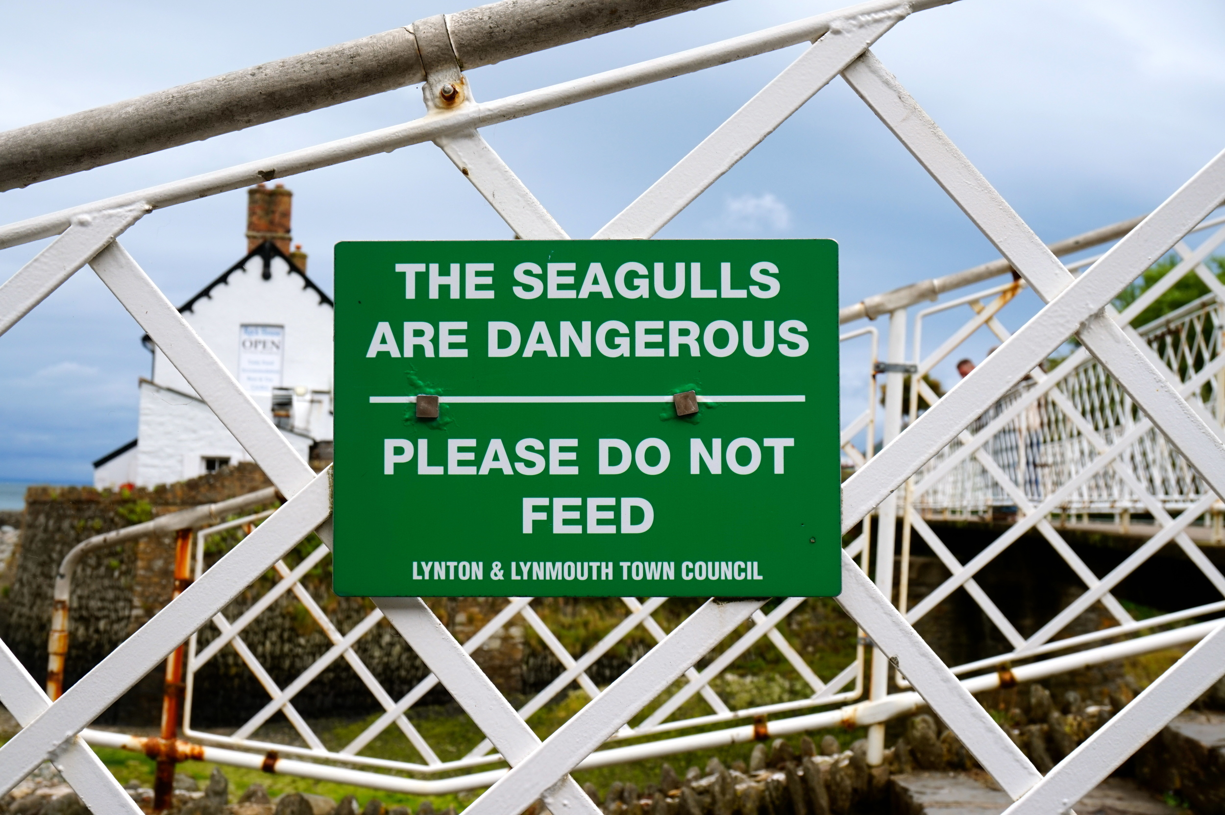 lynmouthseagulls.jpg