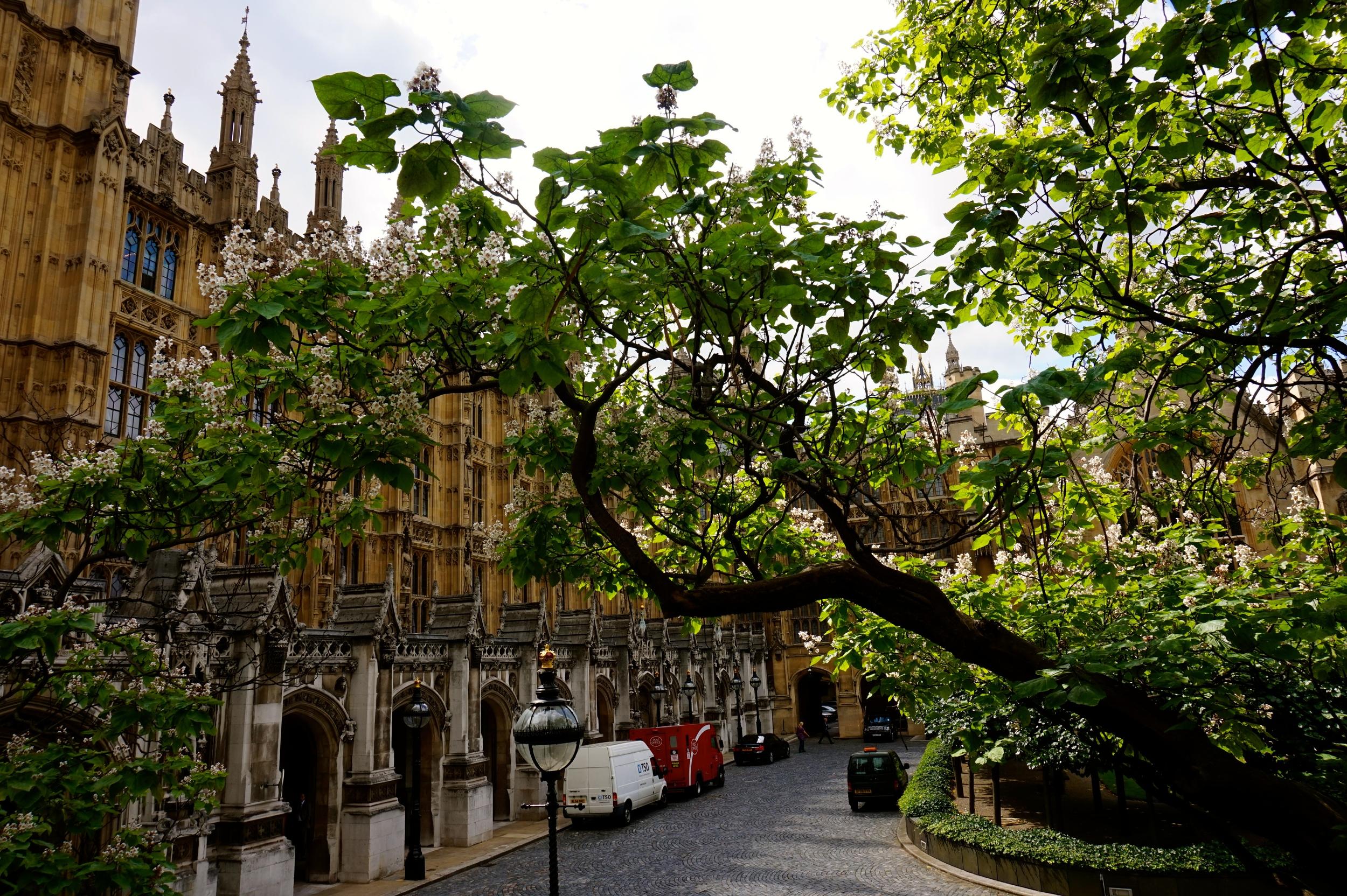 Peeking into Westminster