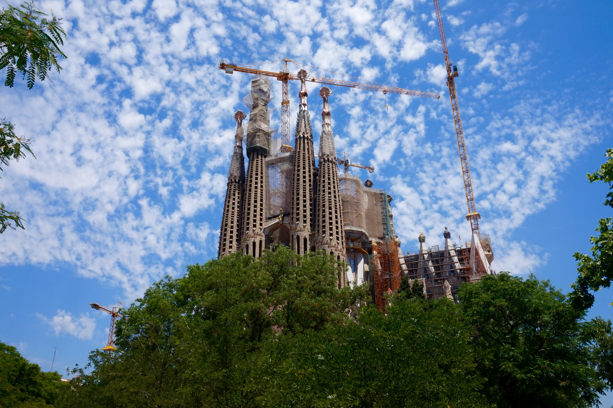 sagradafamiliatrees.jpg