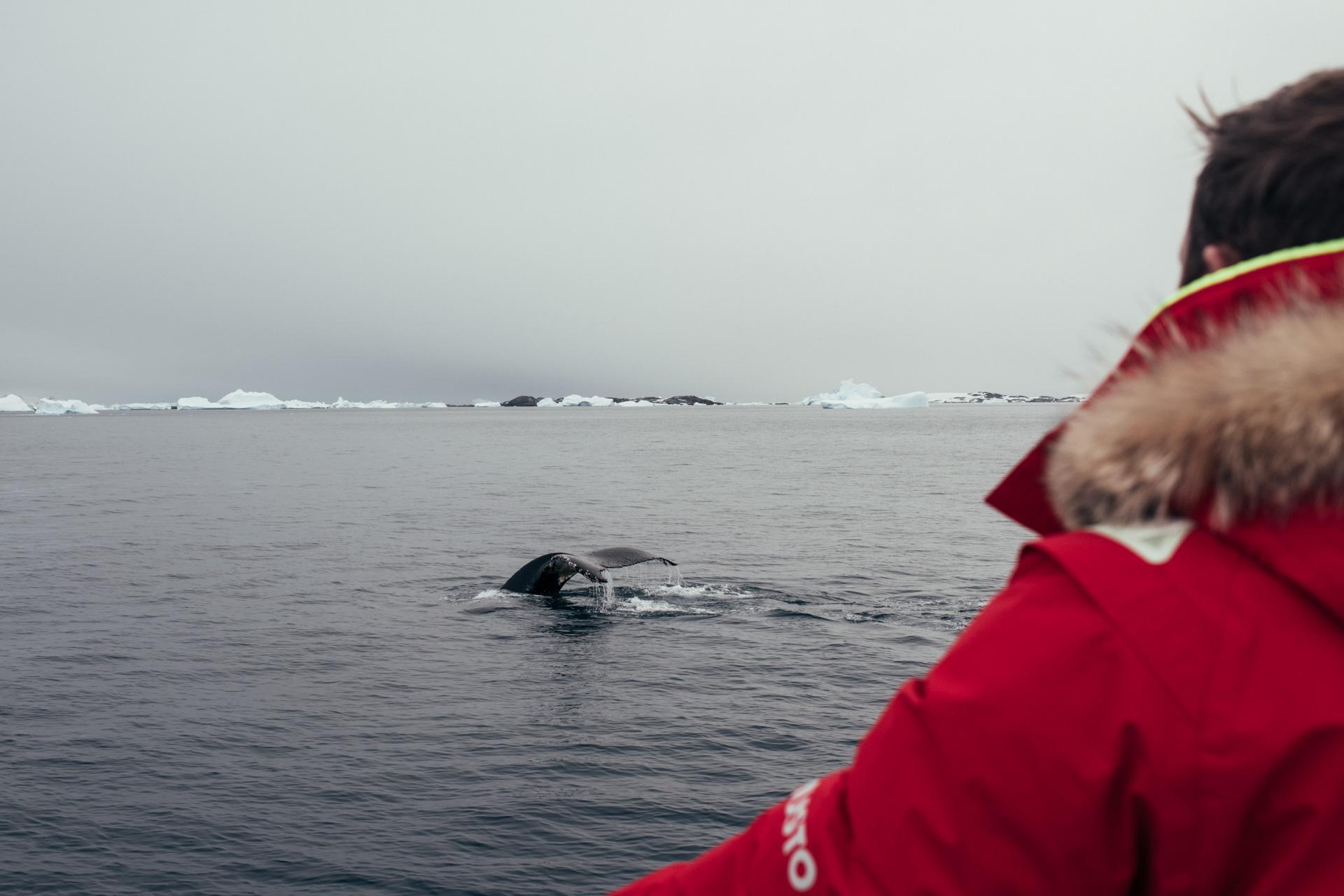 Antartica (90).jpg