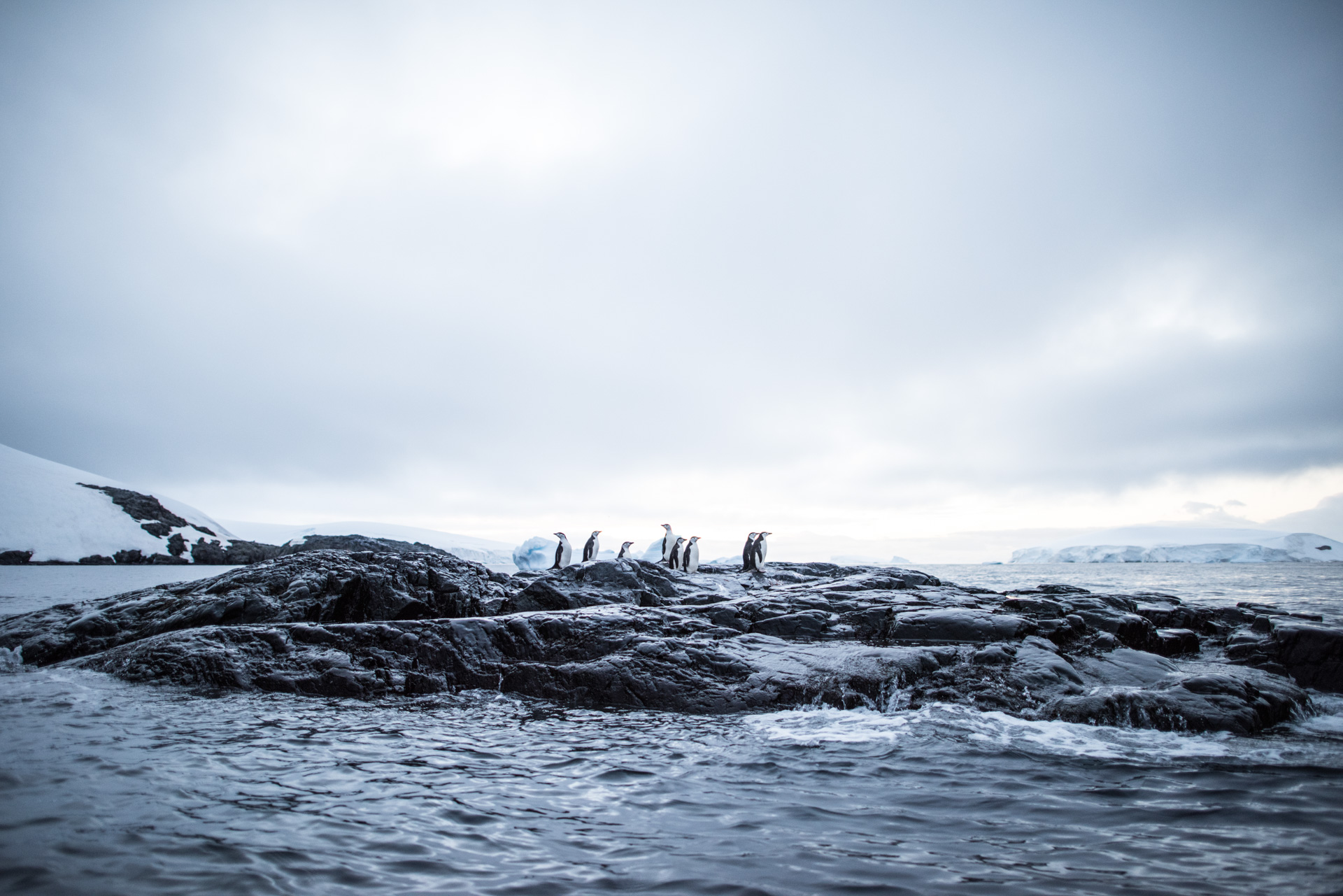 Antartica (117).jpg