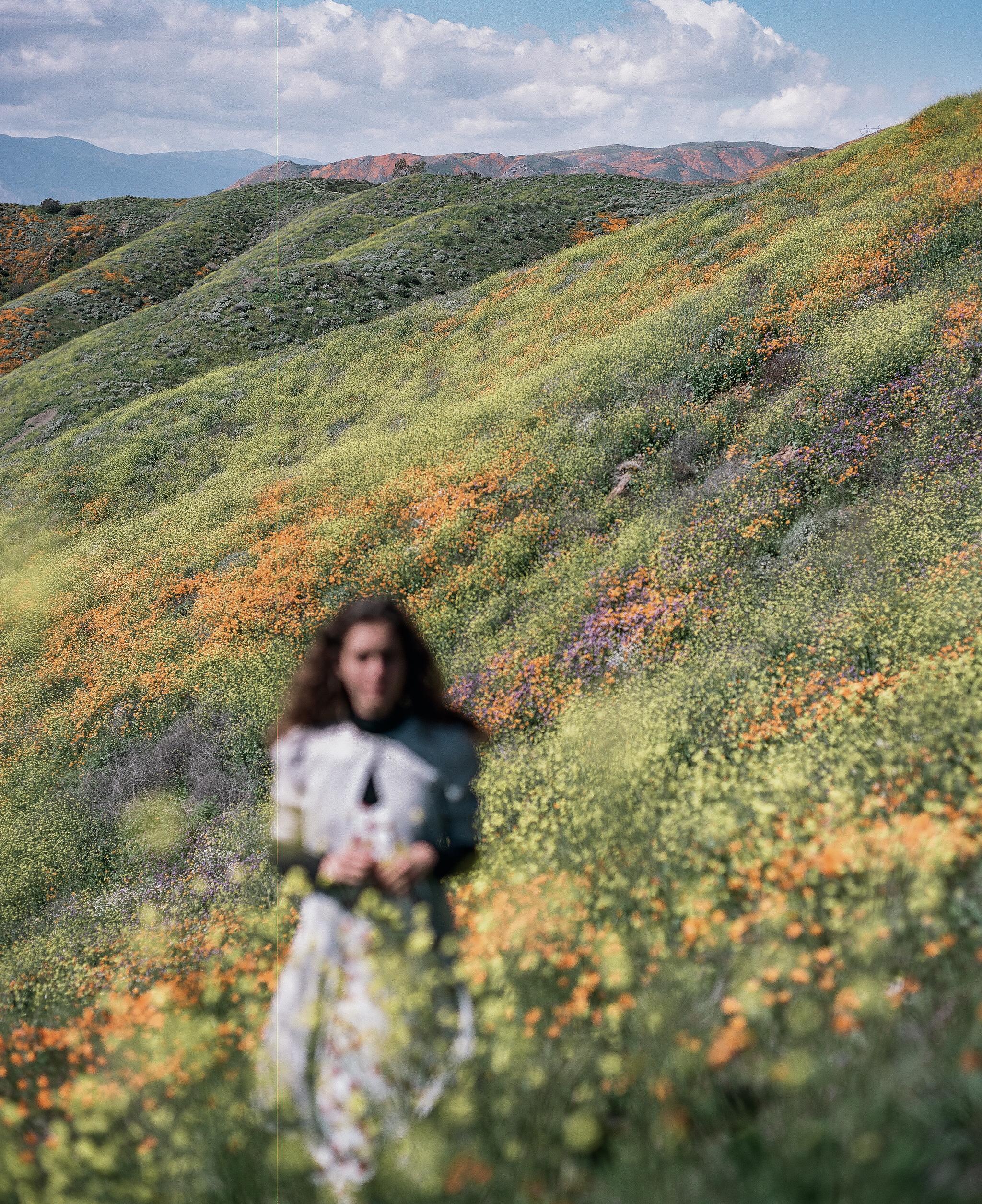 walker canyon, superbloom.  medium format film.
