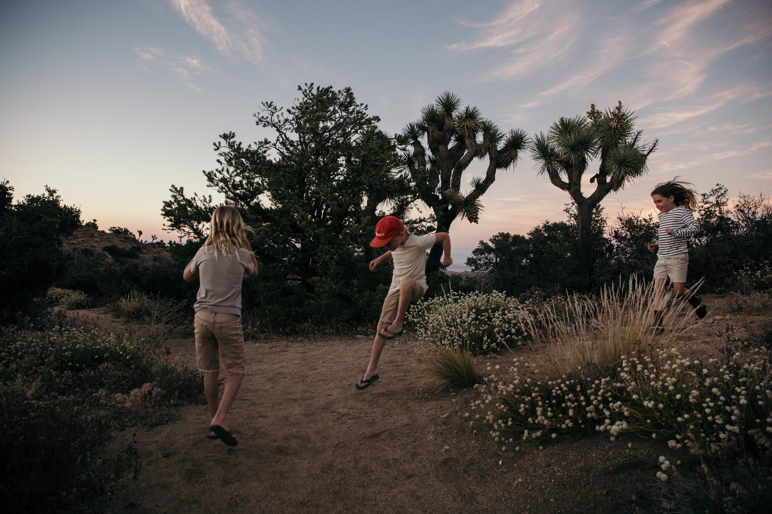 Back roads of Joshua Tree National Park.  Sharon Williams Photography.  Southern California photographer.
