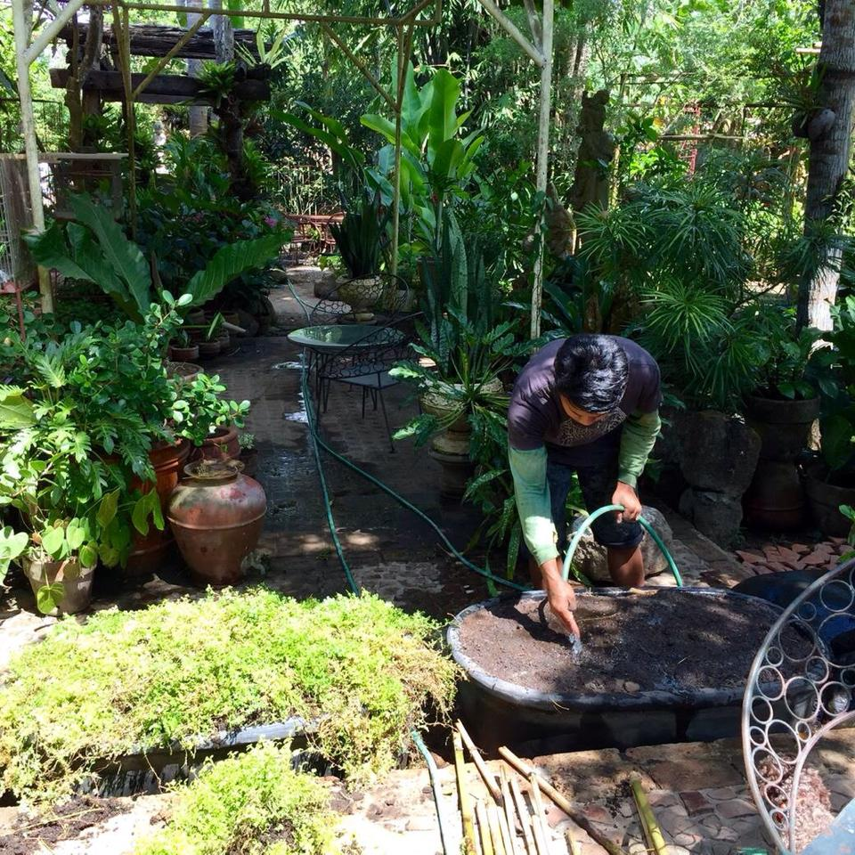 Our gardener, Marlon, taking care of business.