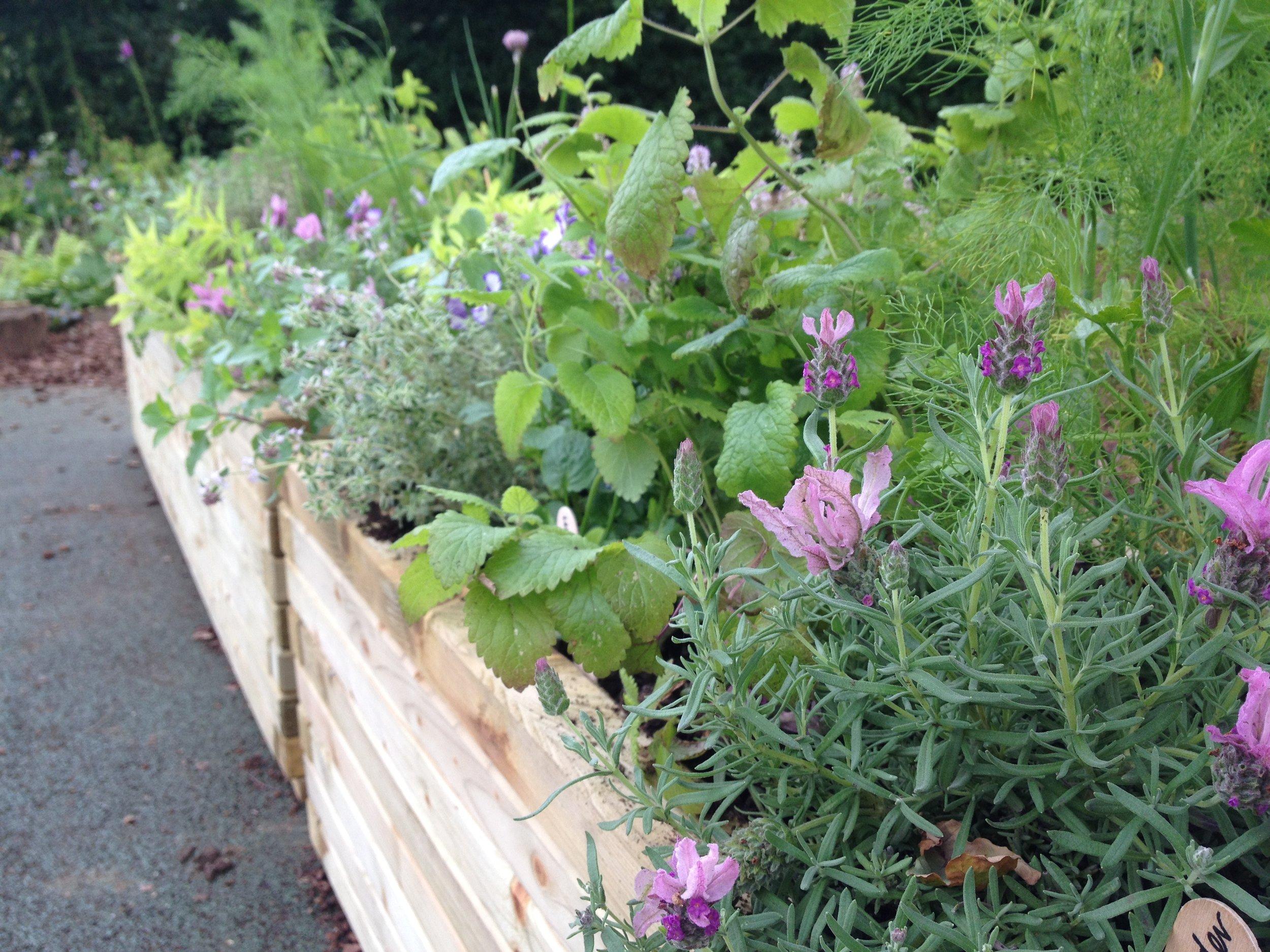 herb planters 2