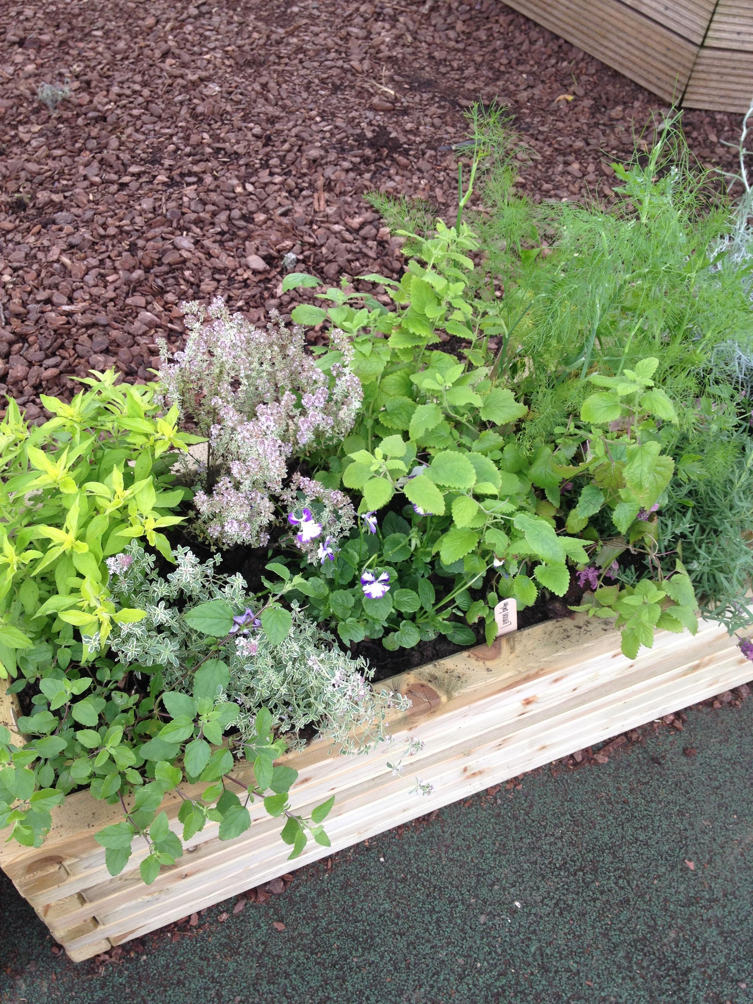 herb planters 3