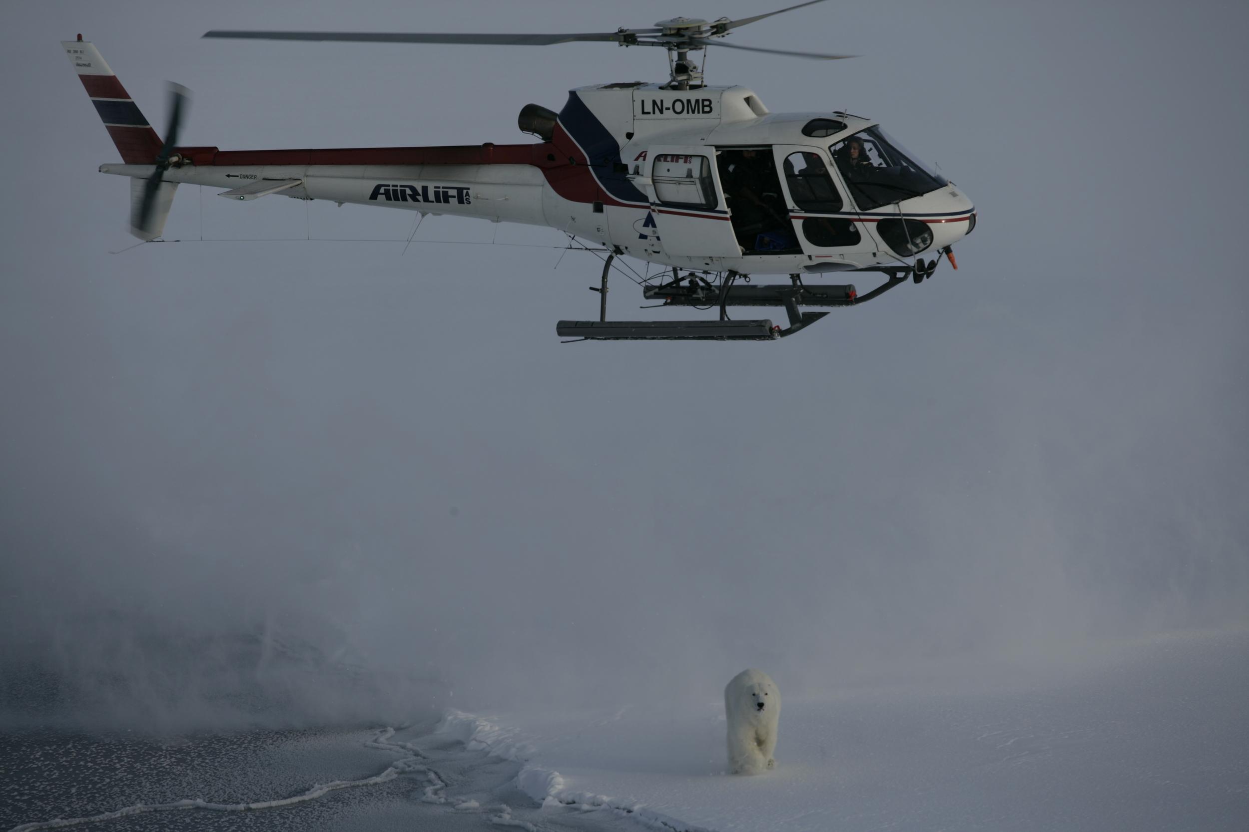 helicopter and bear Hornsund.JPG
