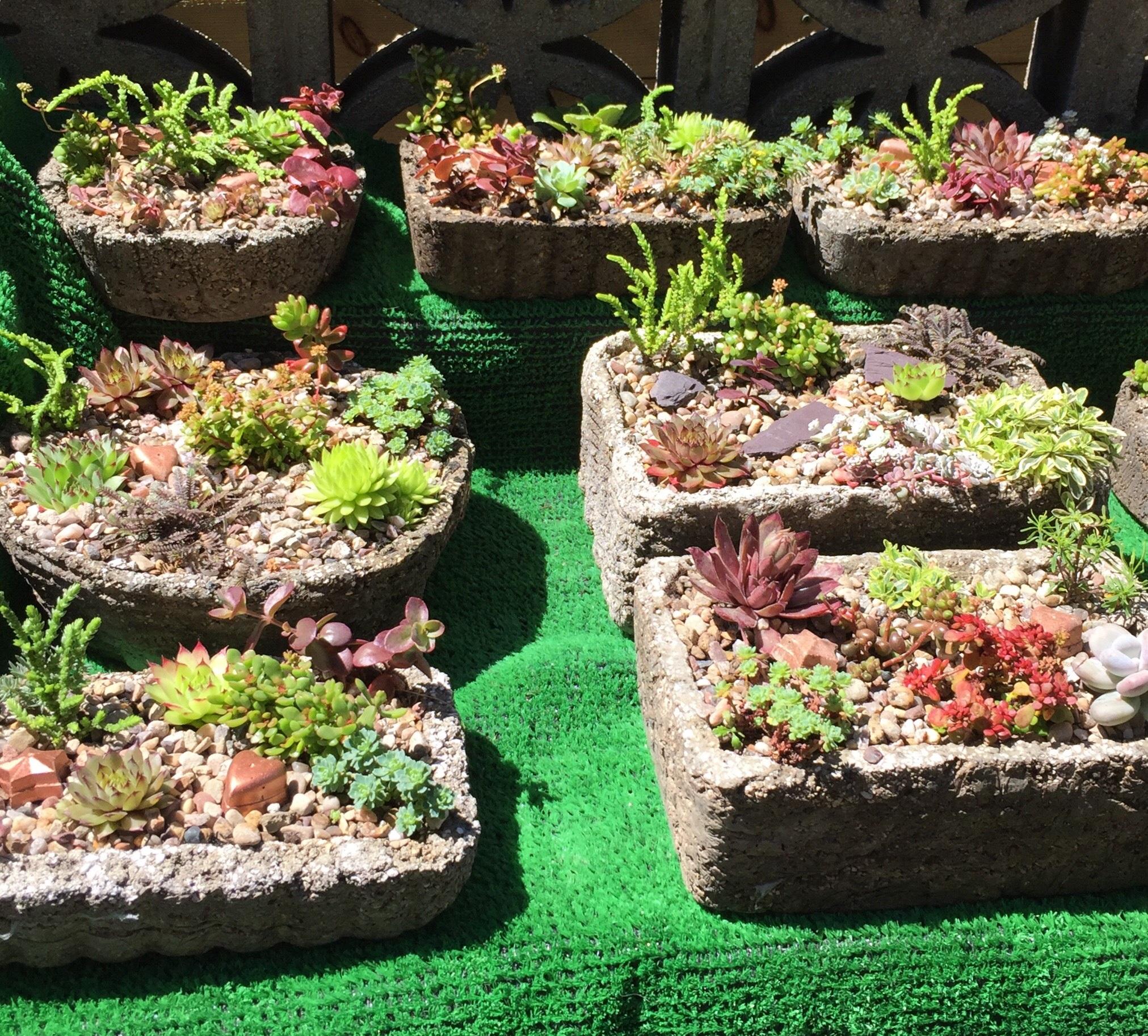 Garden Gifts 3.jpg