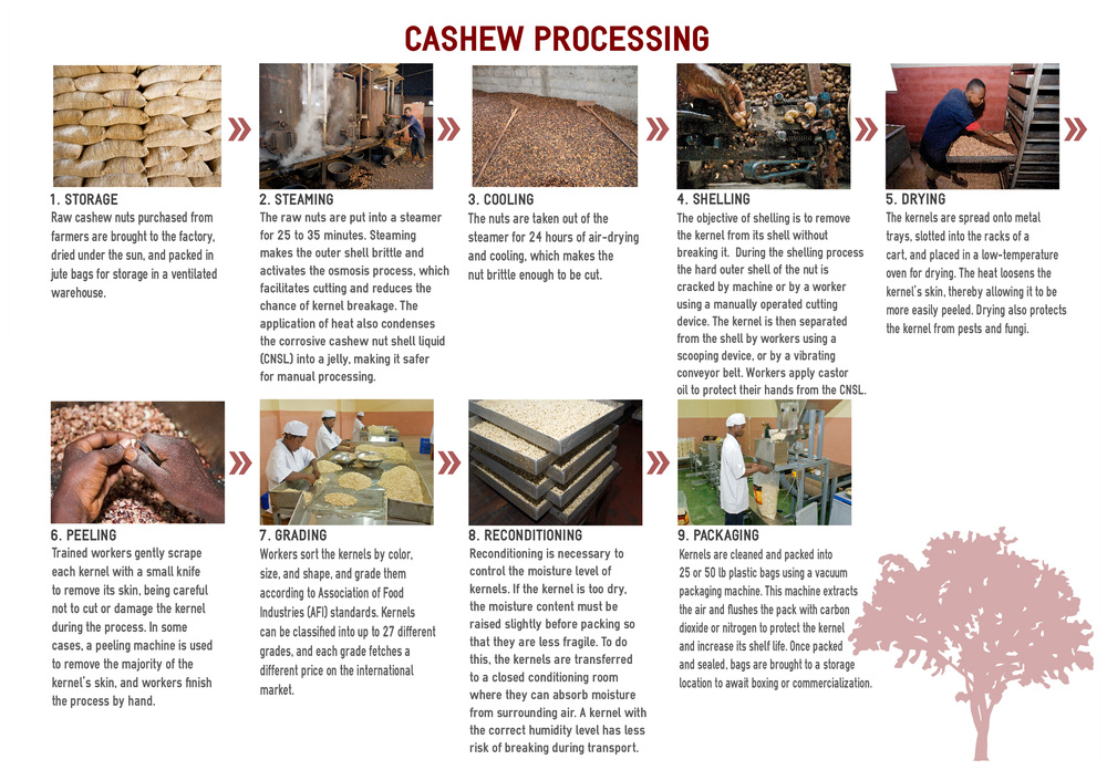stages-of-the-cashew-nut.jpeg