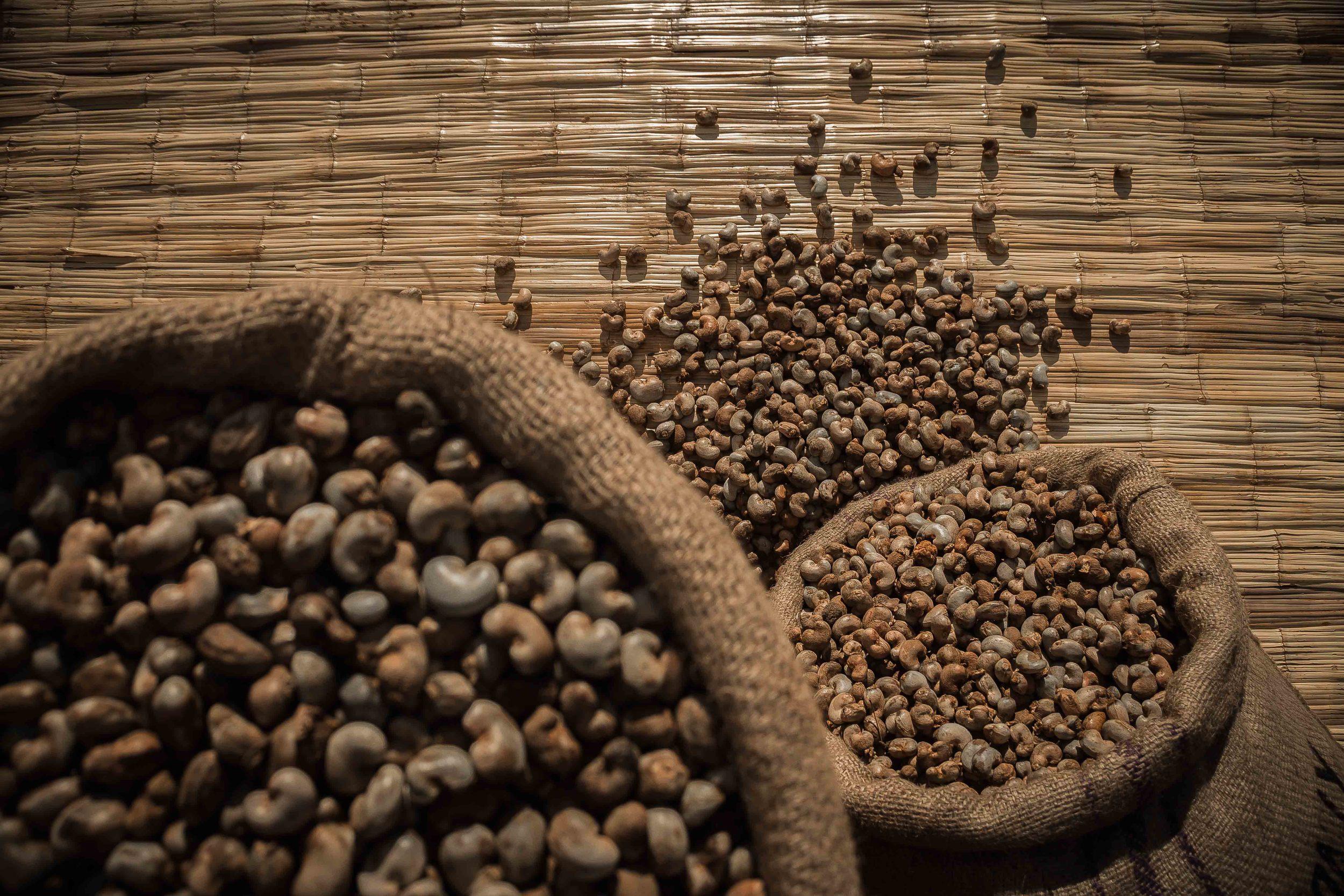 Mogovolas district, Nampula   province  – Raw cashew nut in sacks ready to be sold |  Castanha de caju nos sacos pronto para ser vendido