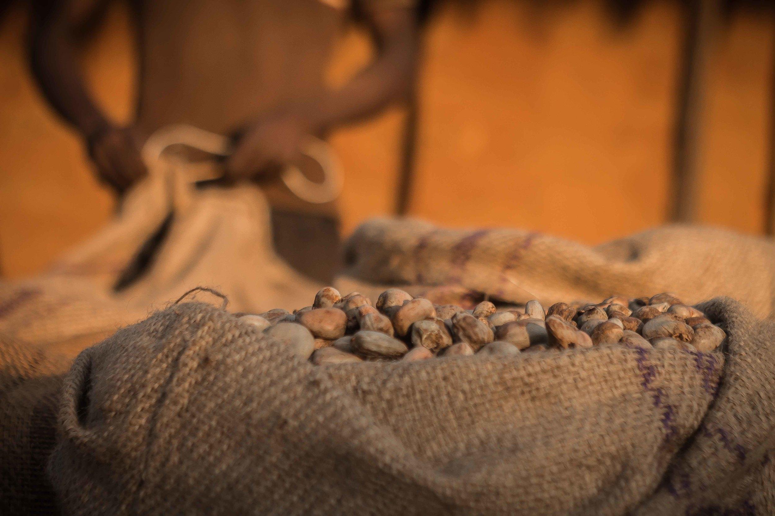 Mogovolas district, Nampula   province  – Cashew farmers prepare to sell their harvest |  Produtores de MozaCajú preparam a vender sua colheita