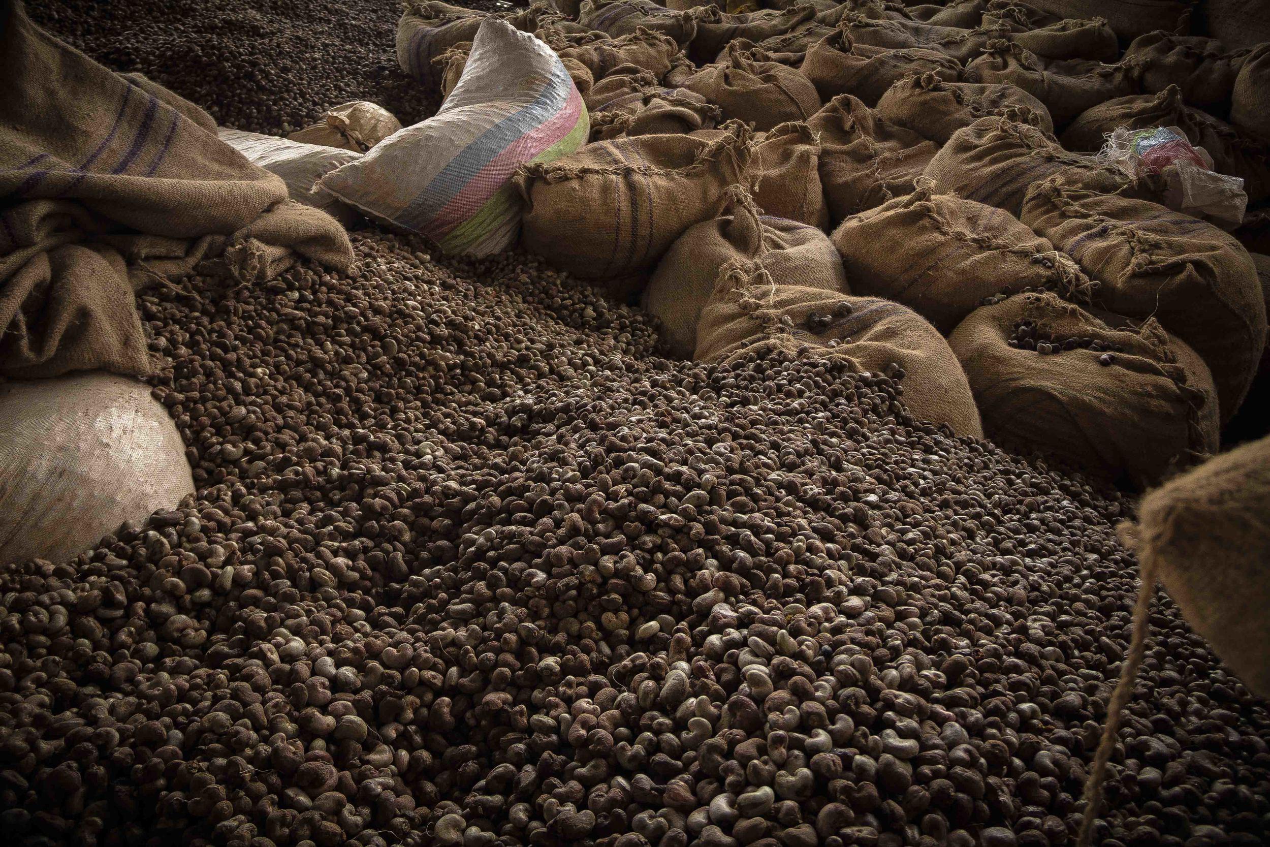 Anchilo district, Nampula province  – Factories like Condor Nuts procure raw cashew nut from farmers in the surrounding areas to be stored and processed throughout the year |  Fabricas como Condor Nuts adquire castanha de caju de produtores nas áreas próximas para ser armazenadas e processadas ao longo do ano