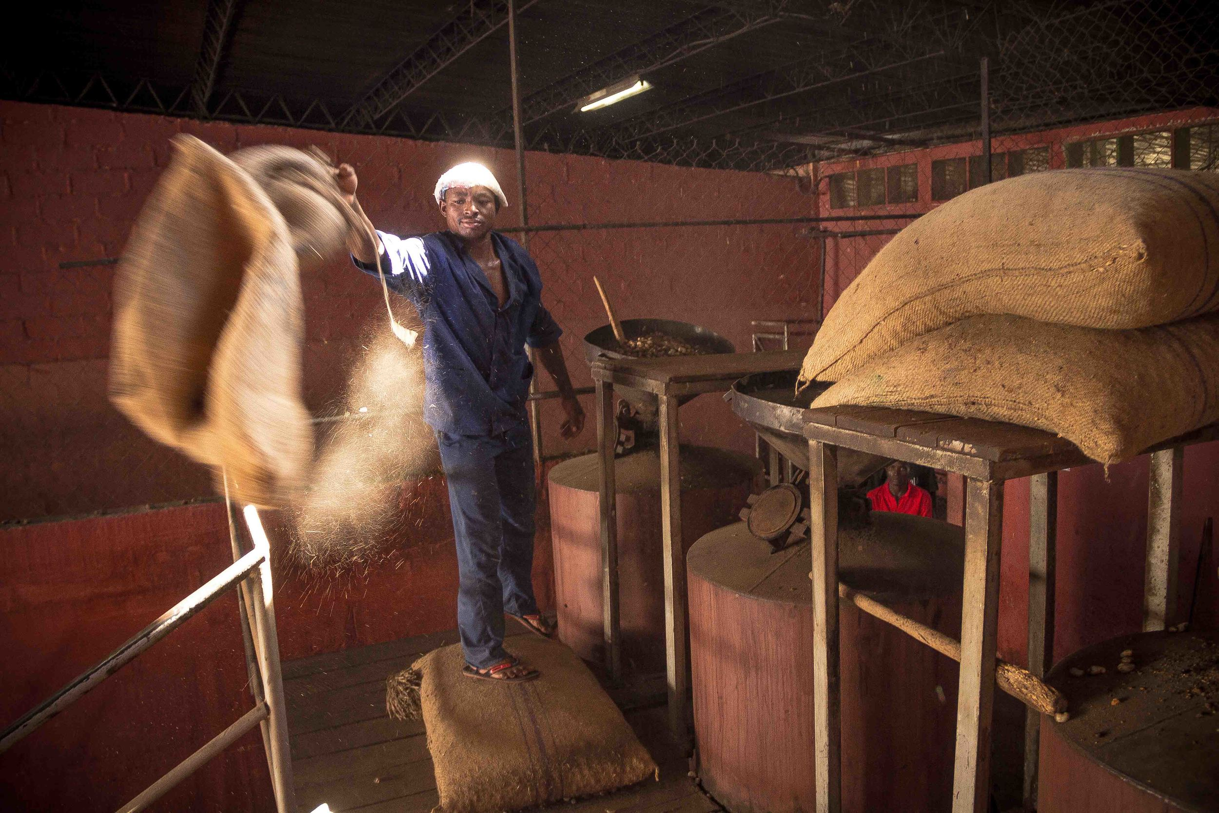 Anchilo district, Nampula province  – As the first step of the shelling process, a worker at the Condor Nuts factory fills the boilers with raw cashew nut |  Como parte do processo de descasquem, um trabalhador na fábrica da Condor Nuts enche as panelas para cozedura com castanha de caju