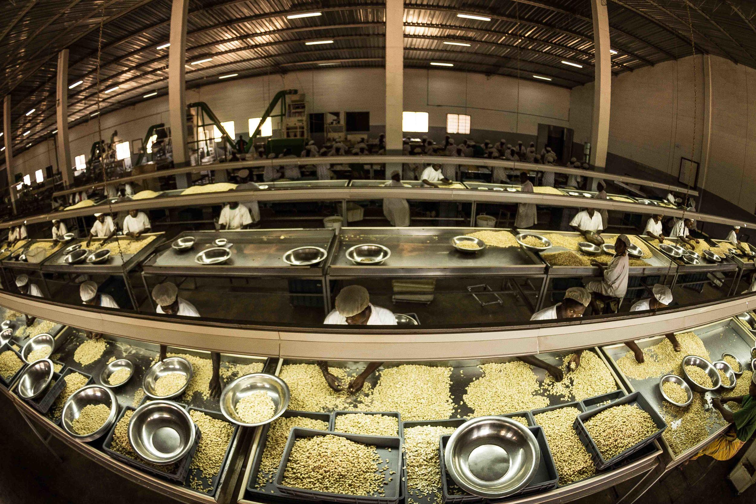 Anchilo district, Nampula province  – The view from above the selection section in the Condor Nuts factory |  A vista de cima da secção de selecção na fábrica da Condor Nuts