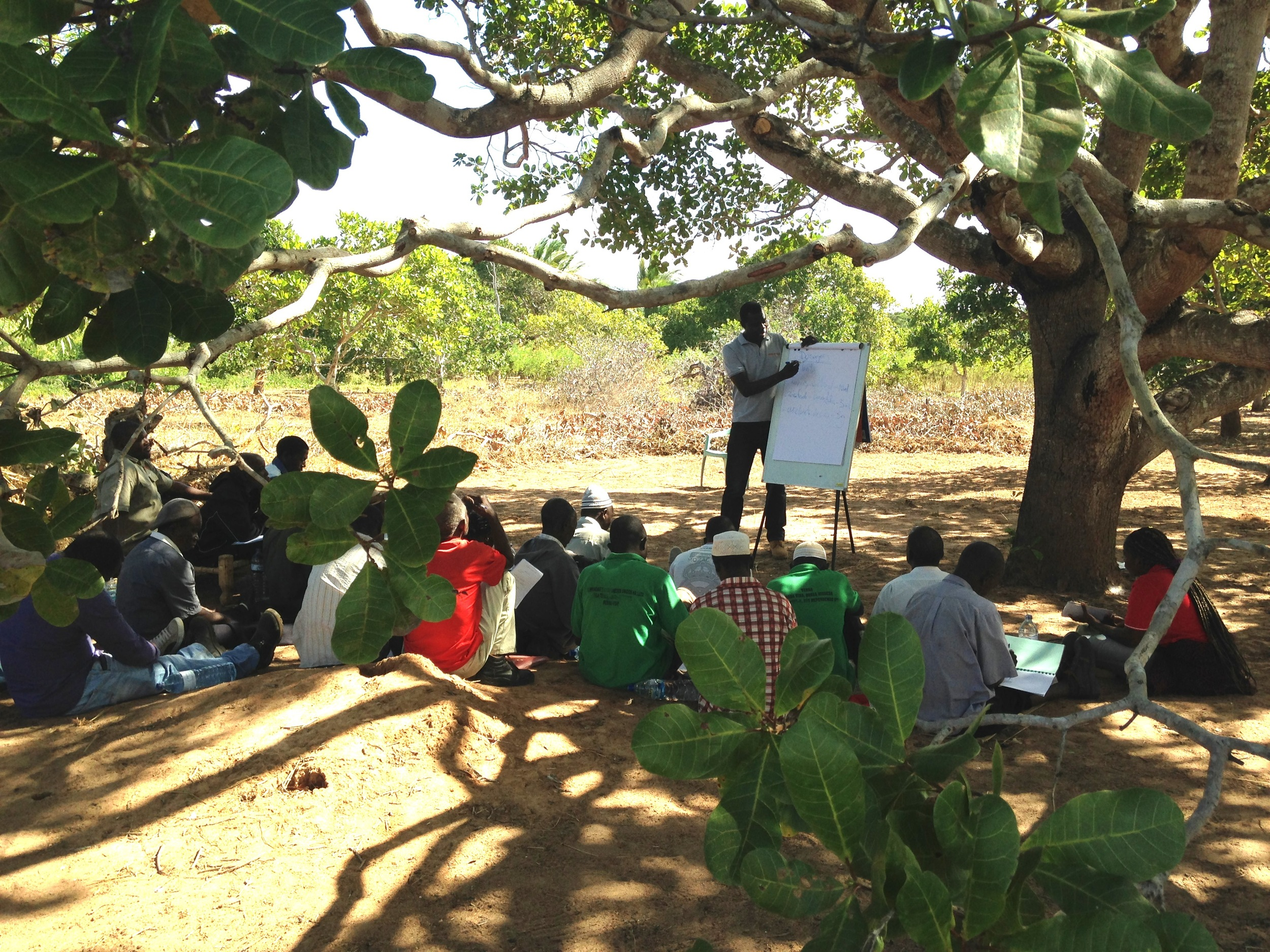 MozaCajú training session for cashew farmers and promoters in Chiúre, Cabo Delgado, Mozambique