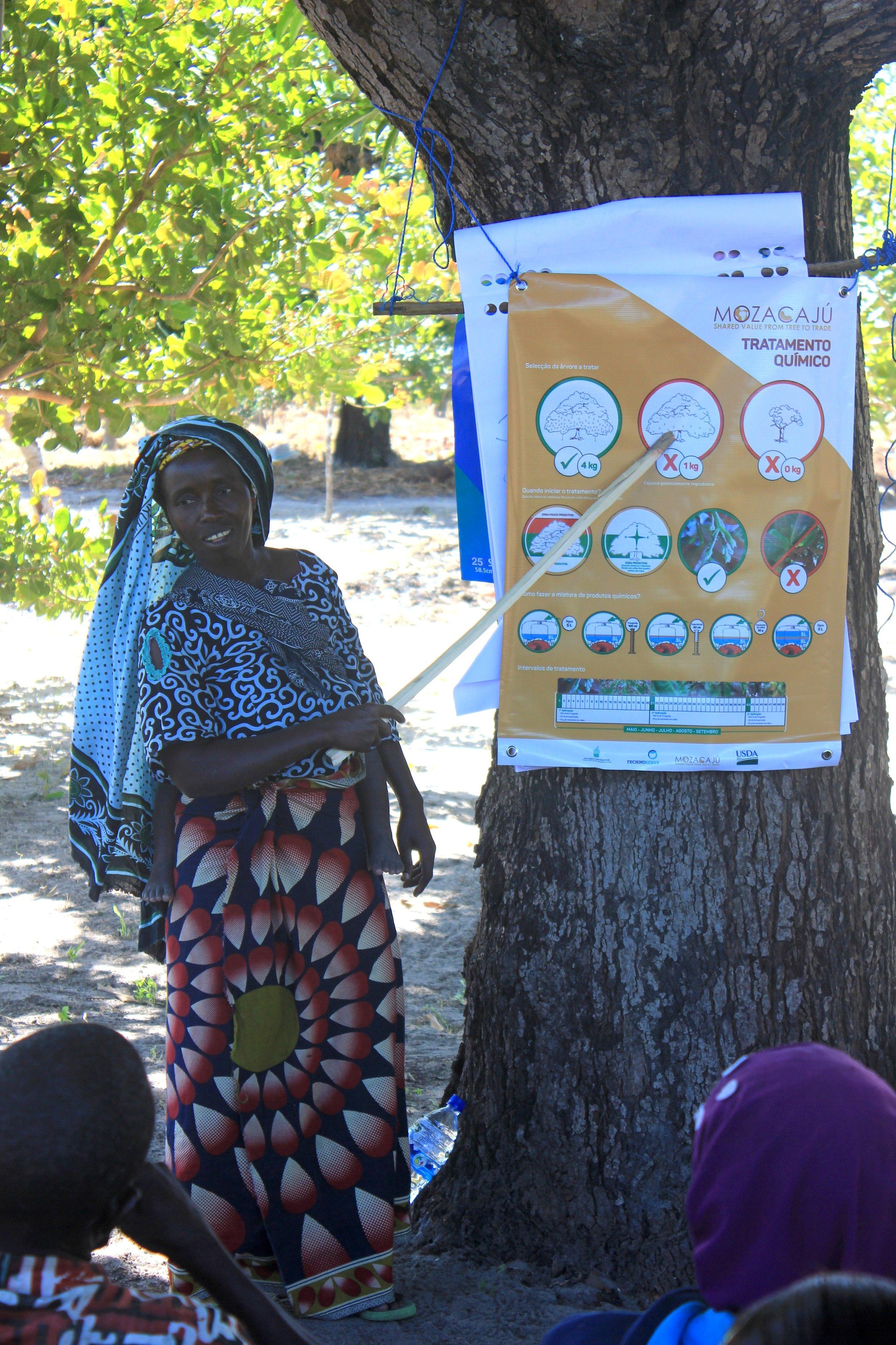 Mocímboa da Praia district, Cabo Delgado province  - Sofia Momade, farmer and promoter, explains how to protect cashew trees from pests and disease |  Sofia Momade, produtora e promotora, explica como proteger cajueiros de pragas e doenças