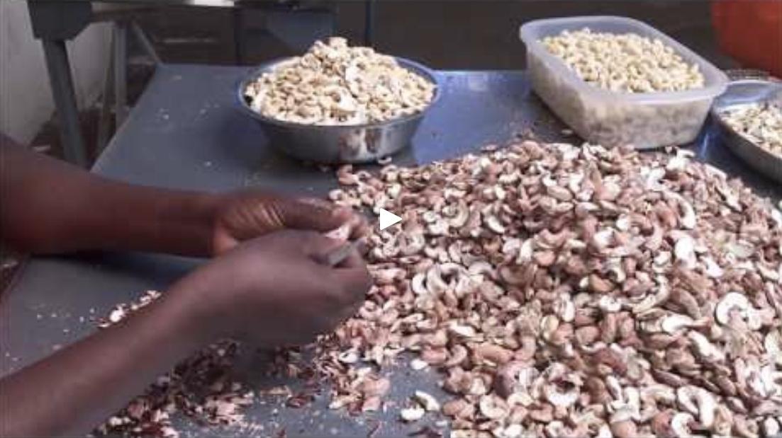Cashew video.jpeg