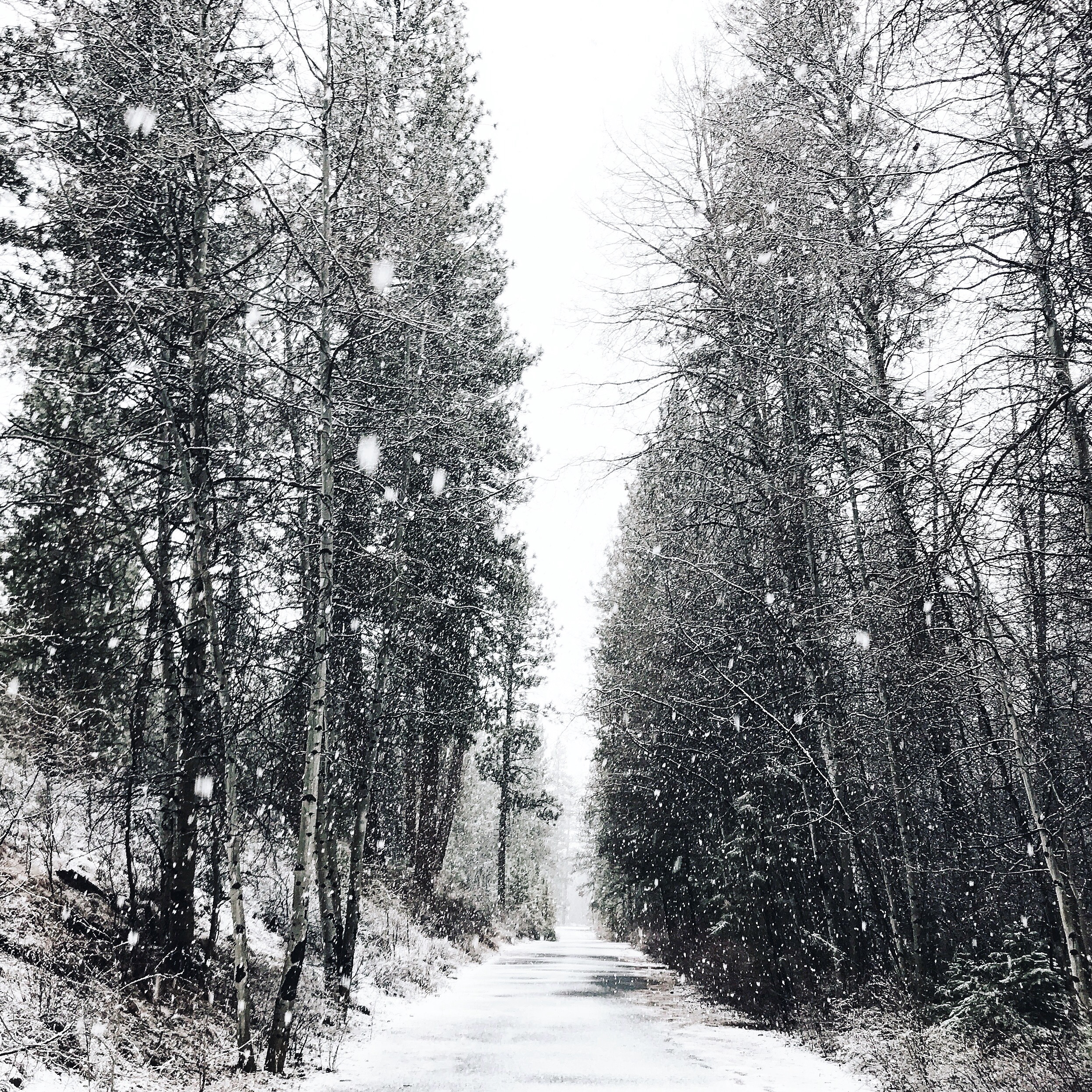 shevlin snow