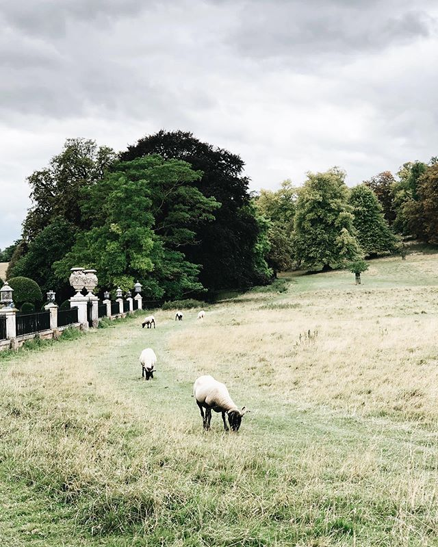 Flying visit to Wimpole to see the cows and the sheep with my man last weekend. #🐏 #🐂 #findgreenbeauty #wimpoleestate @wimpole_estate_nt