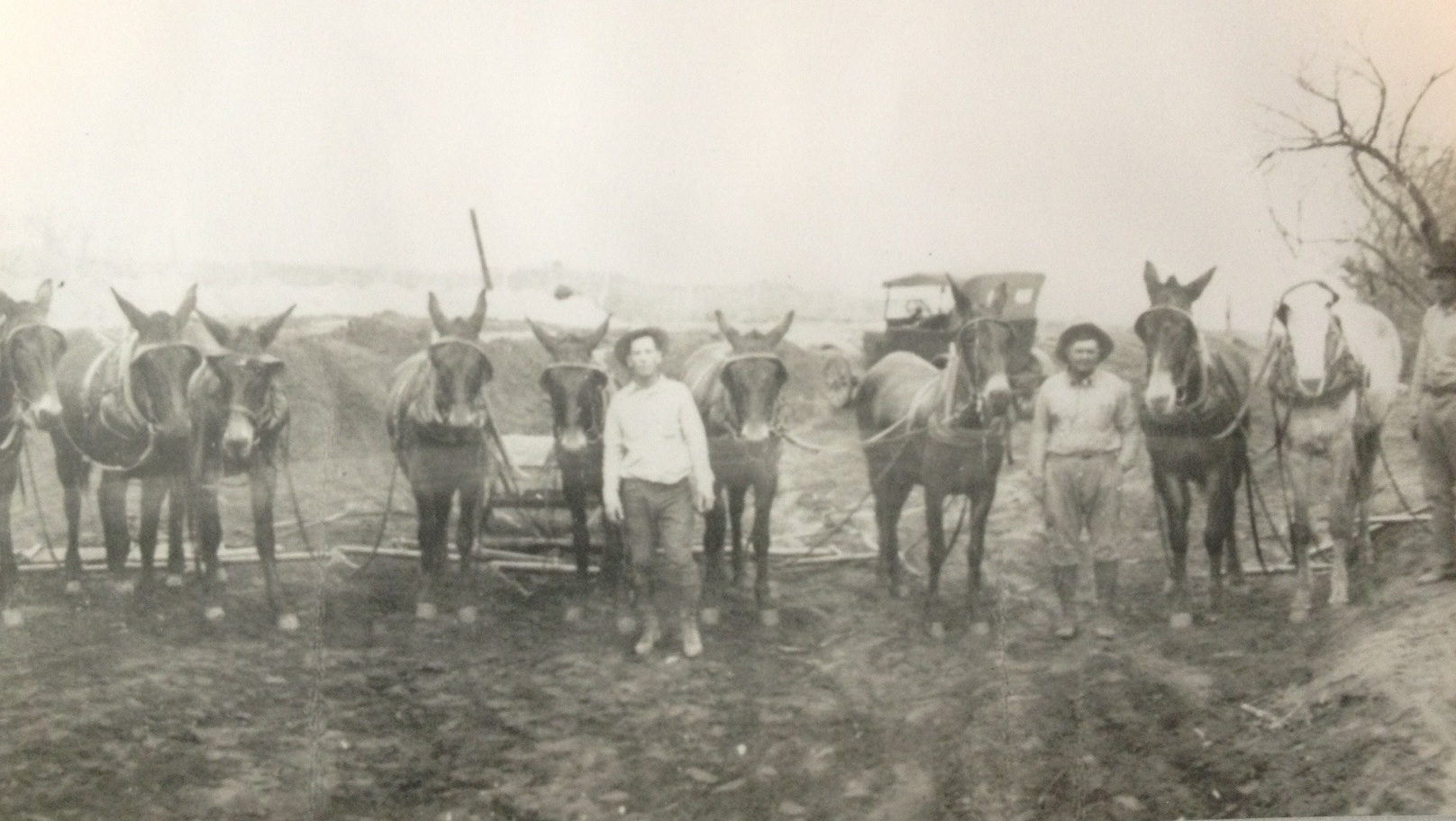Local Rancher, Cecil Ruby, shown  in the center of the photo with his mule team/road construction company, around 1930's.