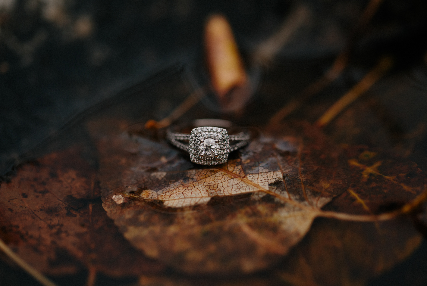 Westra_engagement-151.jpg