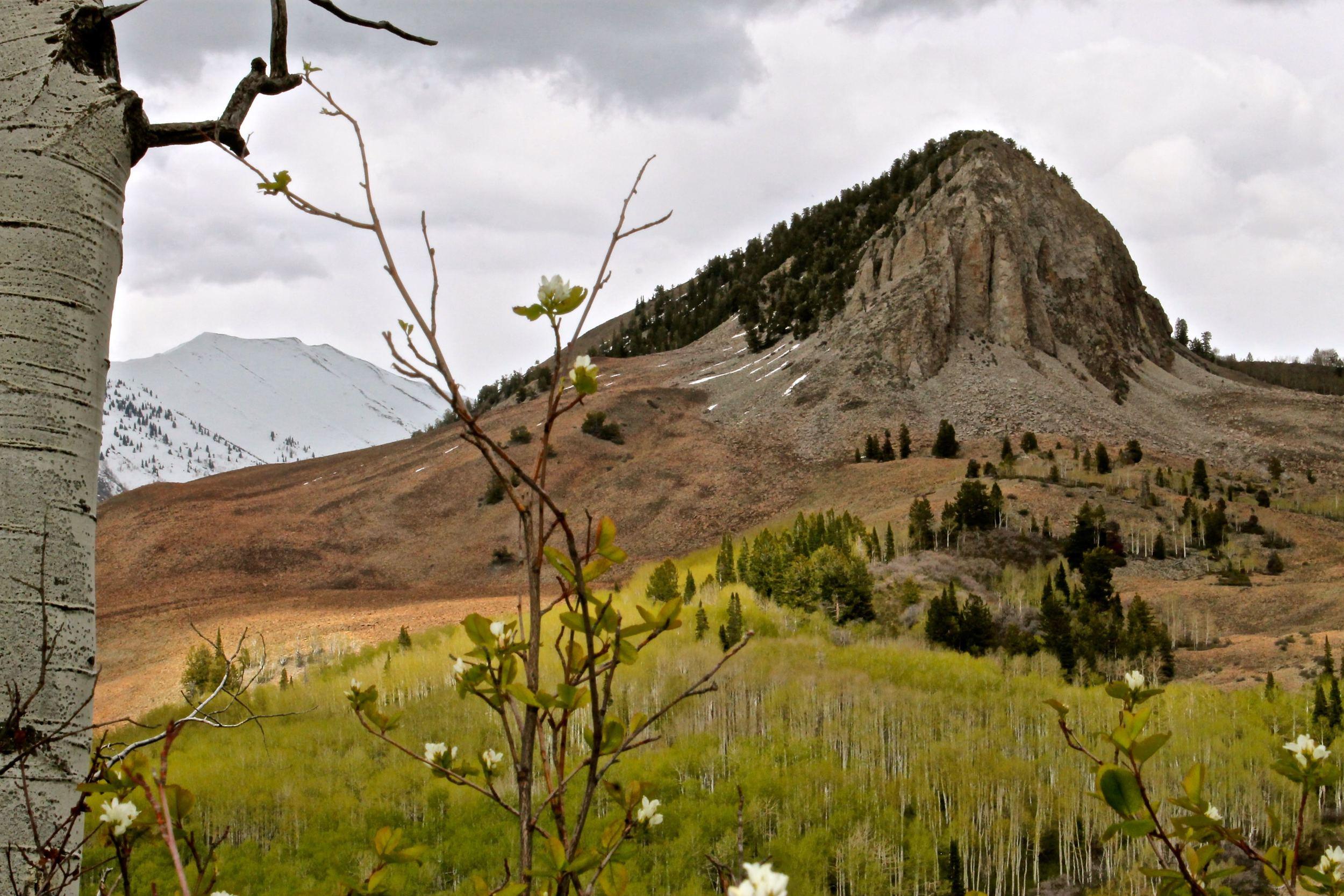 Slide Down Mountain below Mendicant Ridge