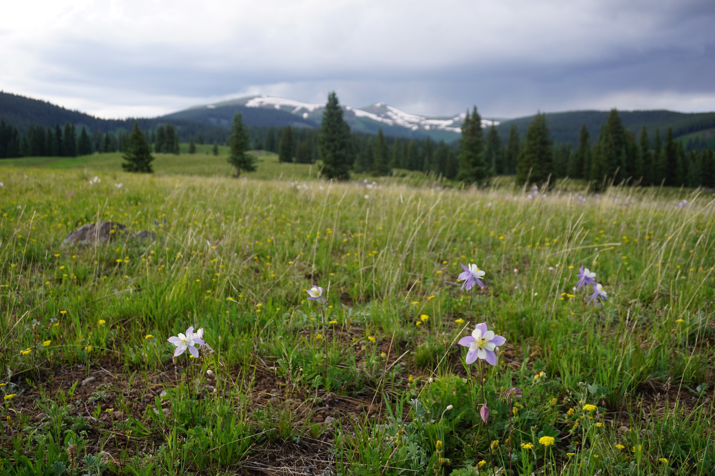 GPLI's proposed addition to the West Elk Wilderness, near Rainbow Lake.