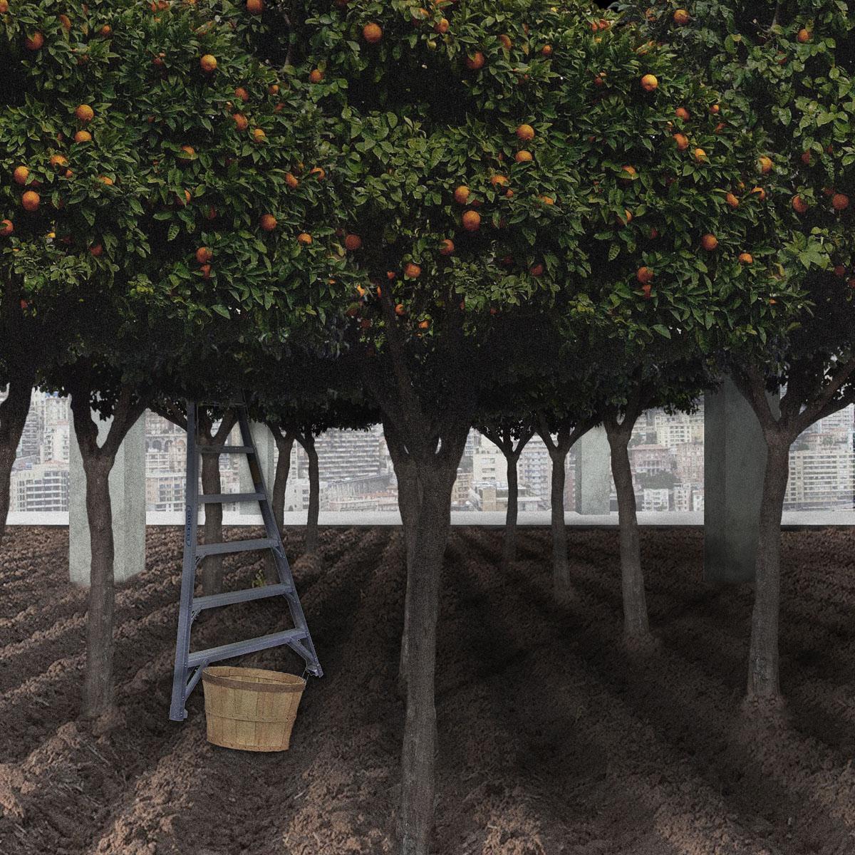 02_Orchard_F01.jpg