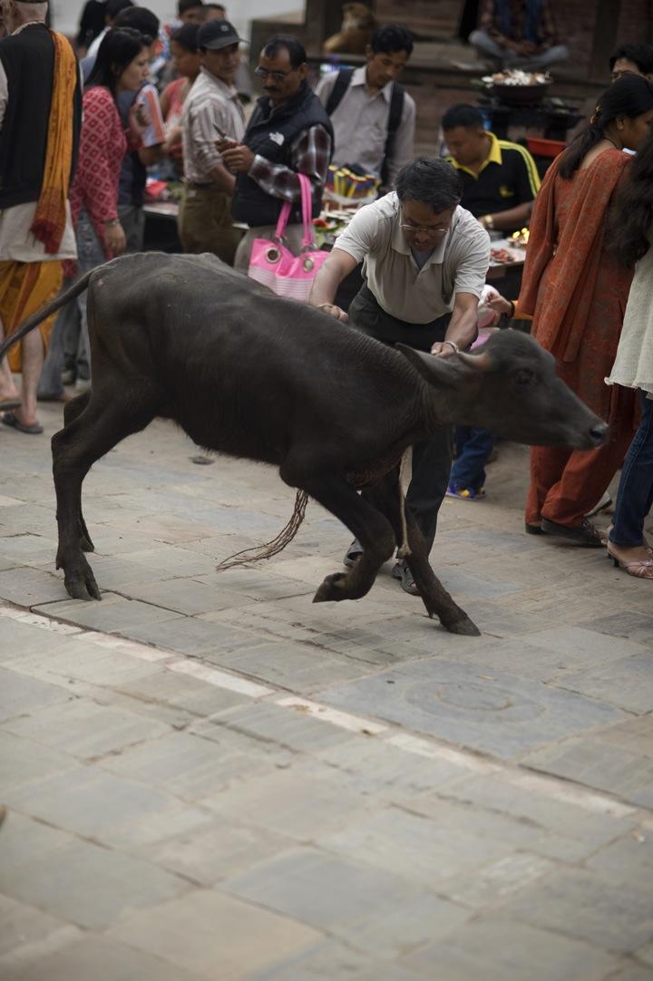 Nepal-4771.jpg