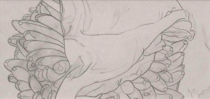 Still Life III , 1996 pencil on paper 5 3/4 x 12 inches; 14.6 x 30.5 centimeters