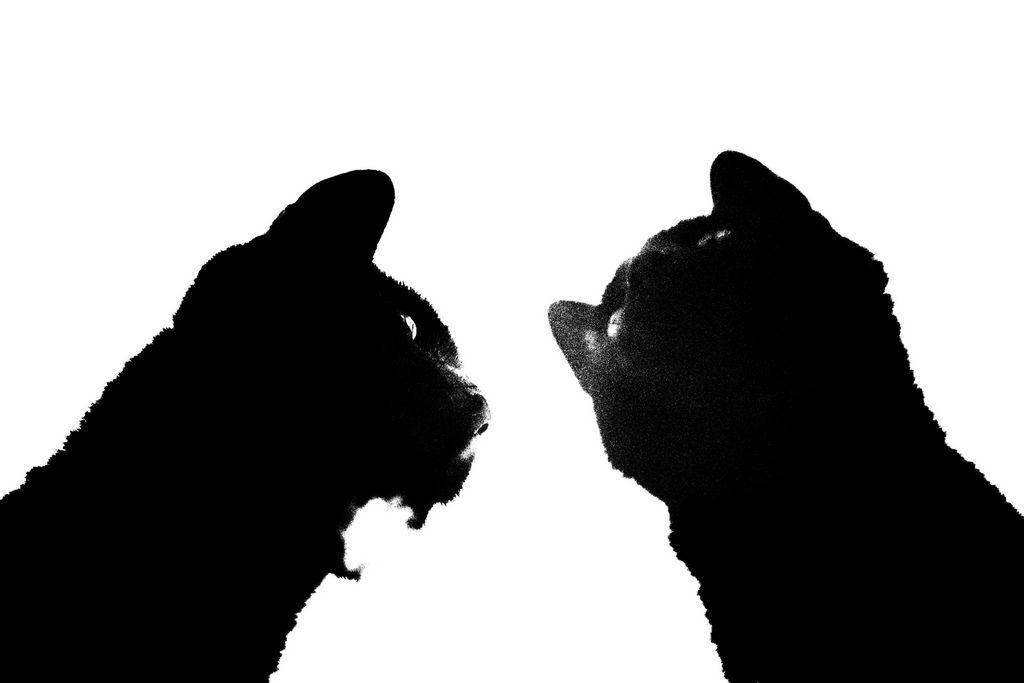 Jean-Francois Spricigo   anima 032 , 2009  digital print 15 3/4 x 23 5/8 inches; 40 x 60 centimeters