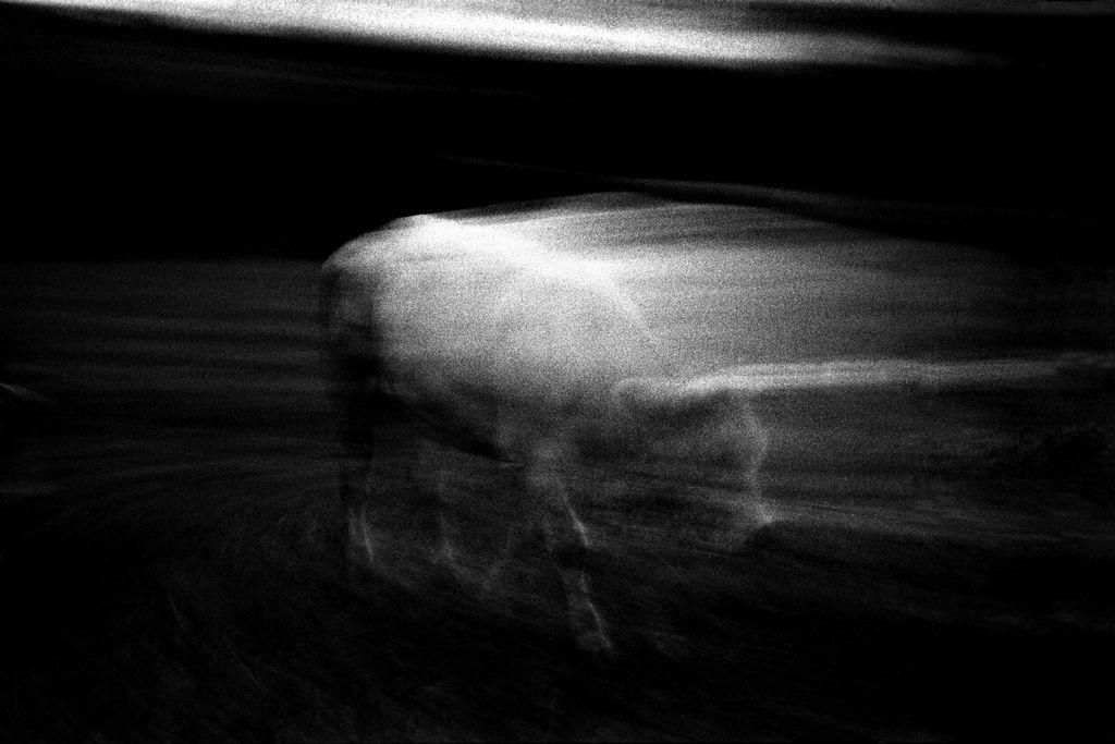 Jean-Francois Spricigo   anima 037 , 2009  digital print 15 3/4 x 23 5/8 inches; 40 x 60