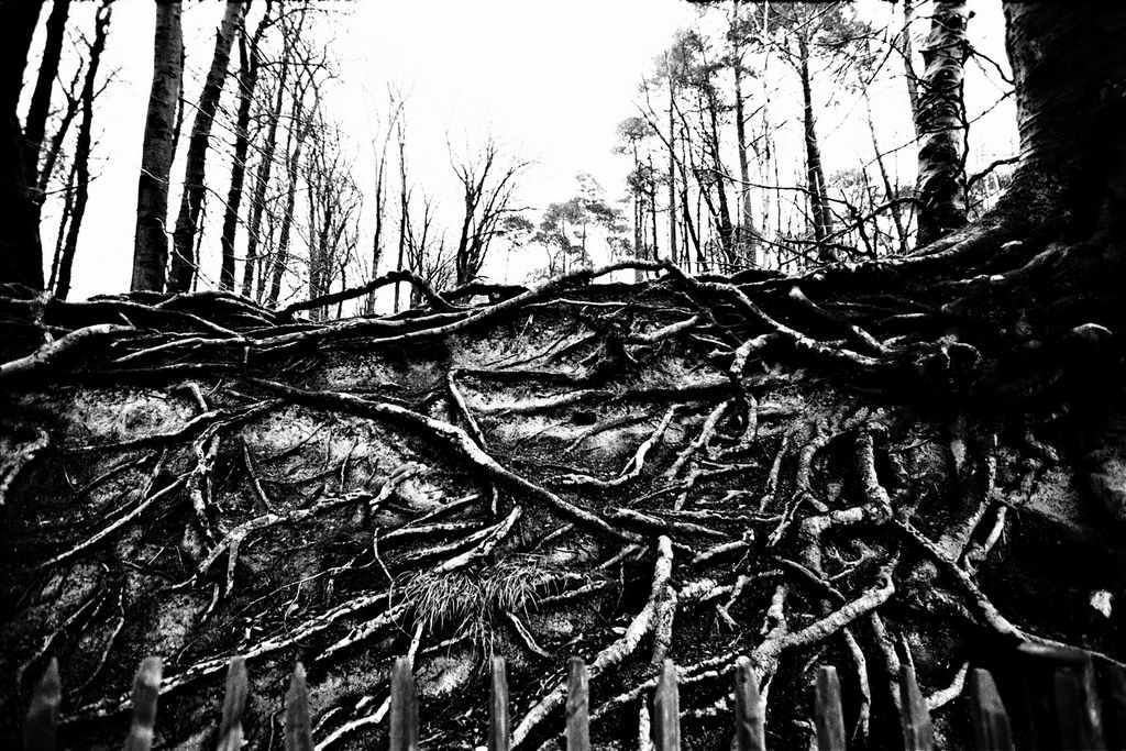Jean-Francois Spricigo   anima 043 , 2009  digital print 15 3/4 x 23 5/8 inches; 40 x 60 centimeters