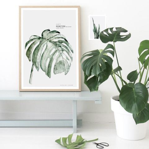 Monstera print from Tea & Kate /  Trouva