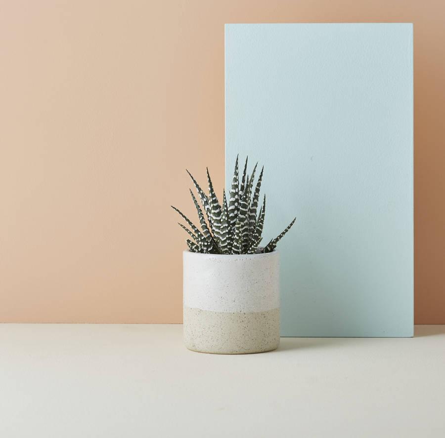 Speckled ceramic pot  - Geofleur / NOTHS - £23 (7.5x7cm)