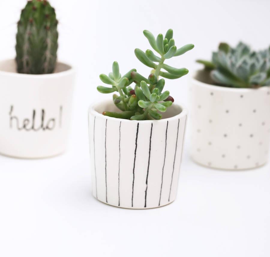 Stripy Ceramic Succulent Pot - Berries for Bella / NOTHS - £16.25 (H 7cm x Dia 7.5 cm)