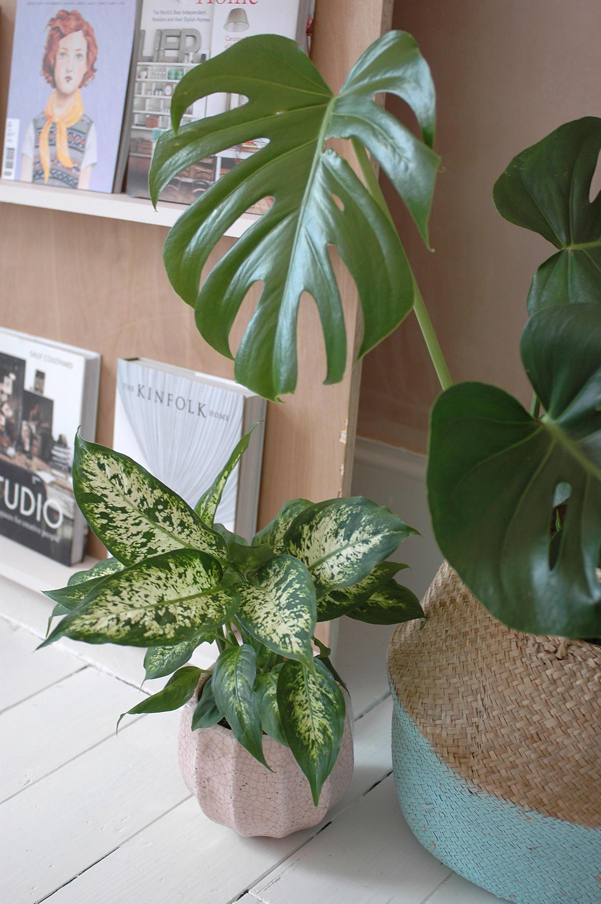 pink plant pot : Anthropologie /  Belly basket : Olli Ella