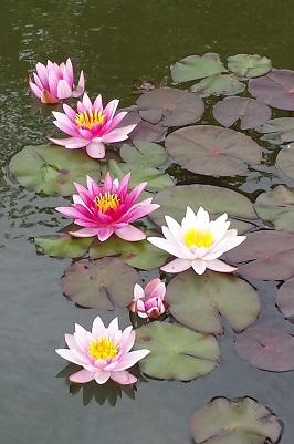 www.susanemma.com Reiki Master Training Courses Surrey 2