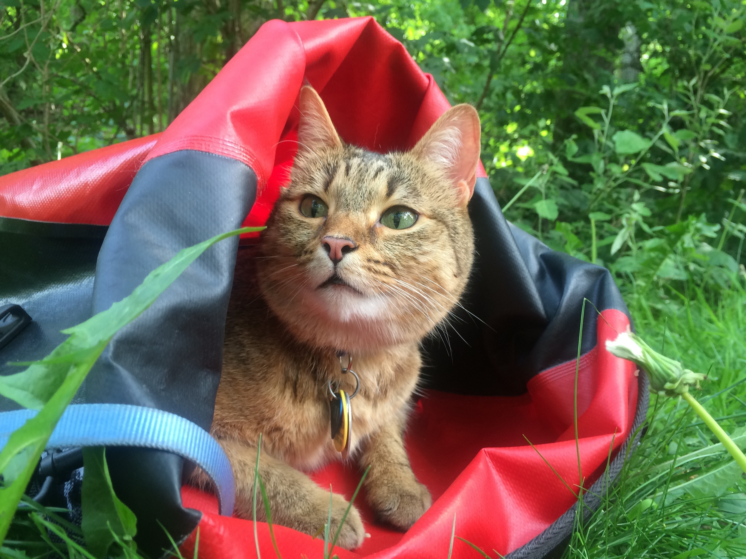 Pro tip - Bring a good pannier with you, that the cat can use to hide out in if it finds the open spaces of your destination stressful. Pannier = portable cave