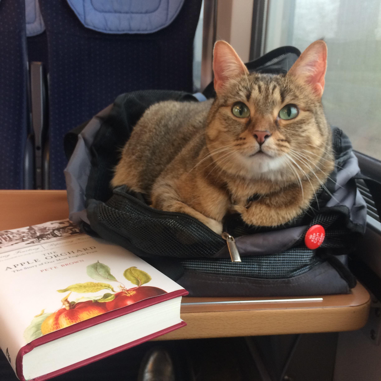 Aífe is an excellent companion on train rides.