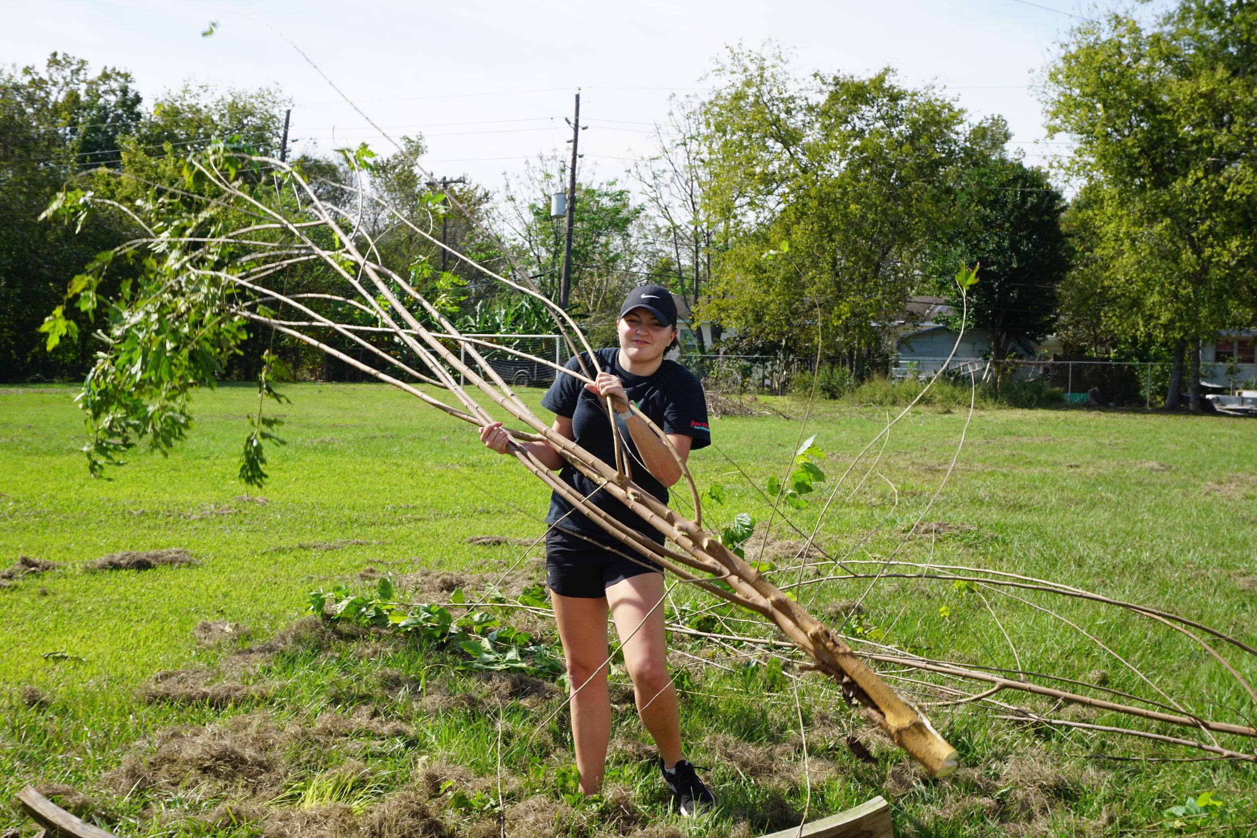 cut down tree