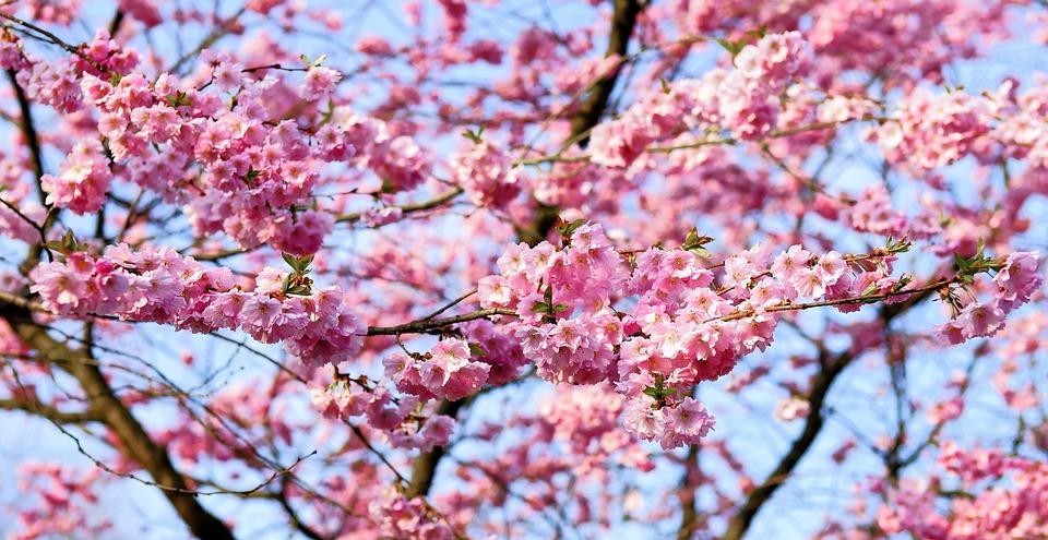 Emily Gardner Xu Hall Cherry Orchard