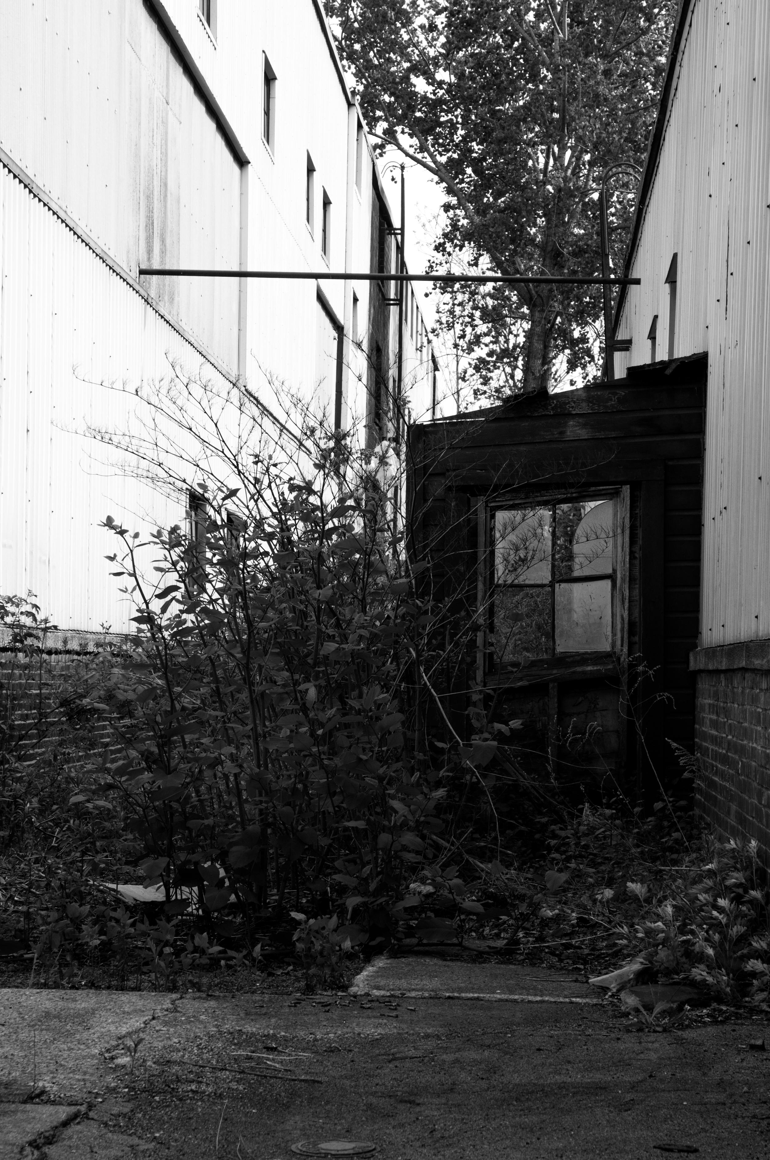 Buffalo_Decay-3026.jpg