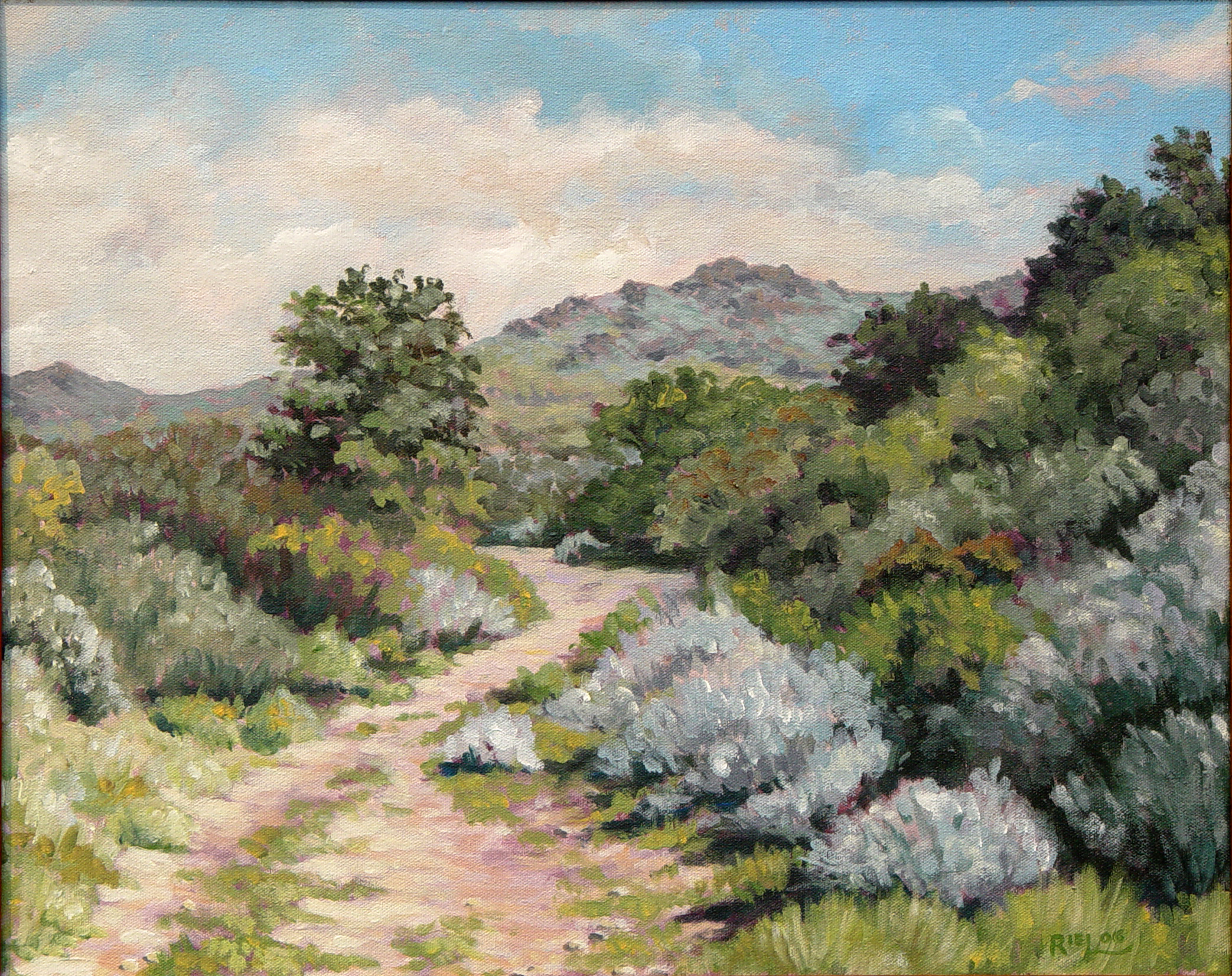 Sycamore Canyon, Early Summer