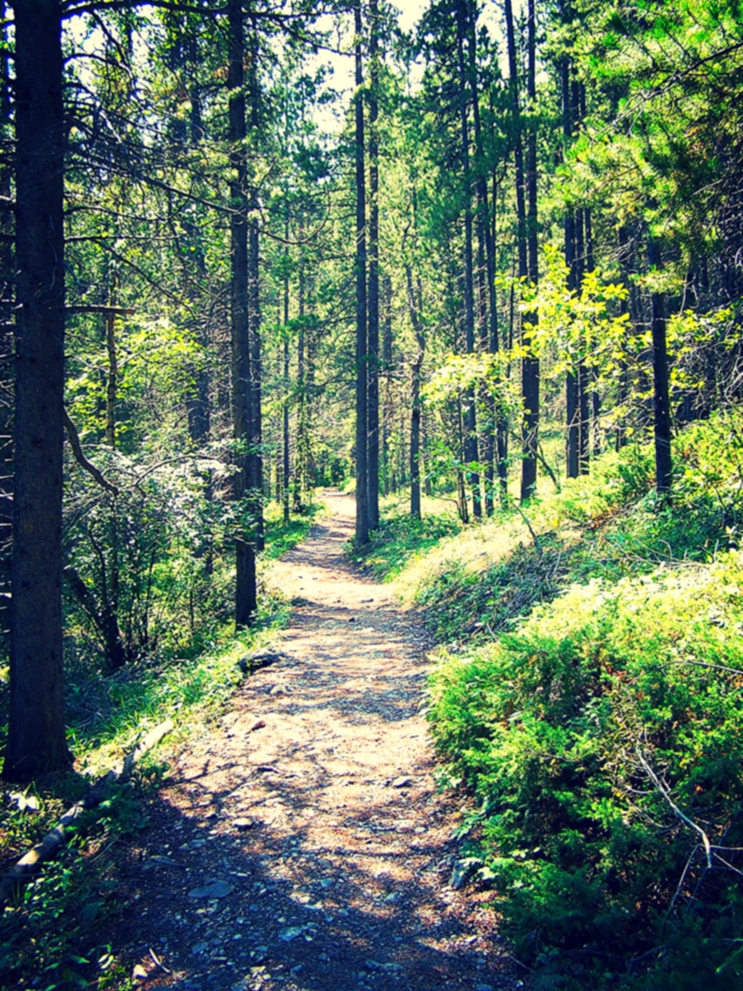 chars path.jpg