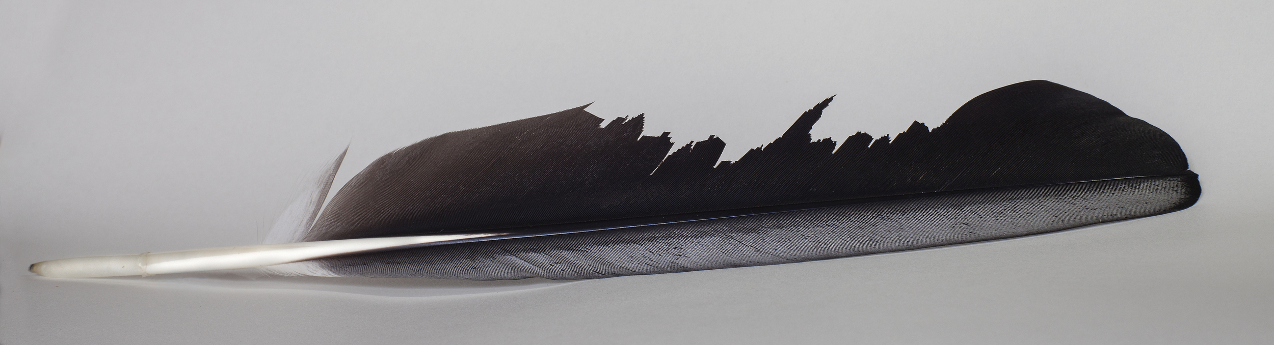Photographs of the Feather series, commissioned by artist/designer  Theresa Blommerde