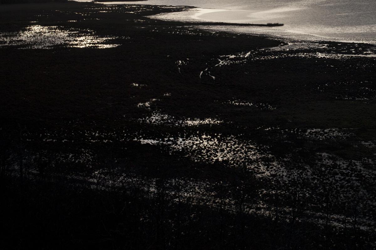 wetlands1.jpg