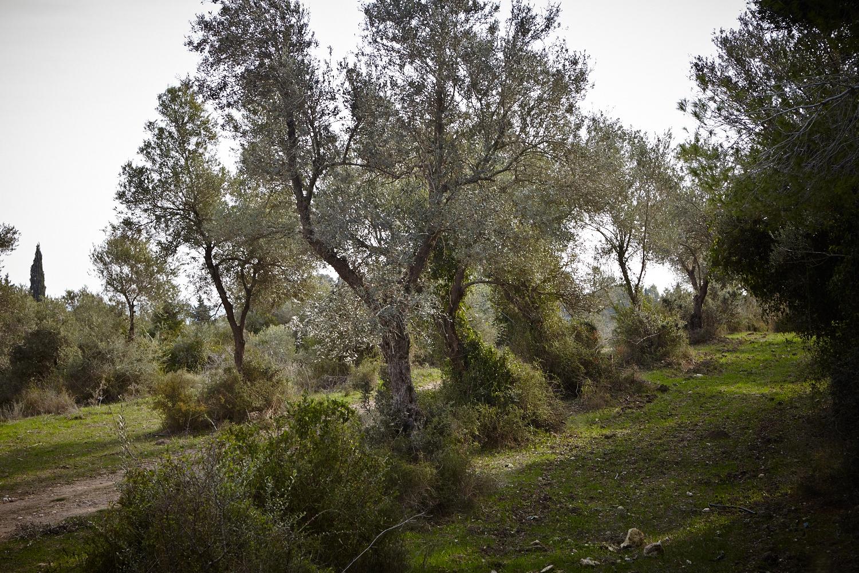 www.patricianiven.com