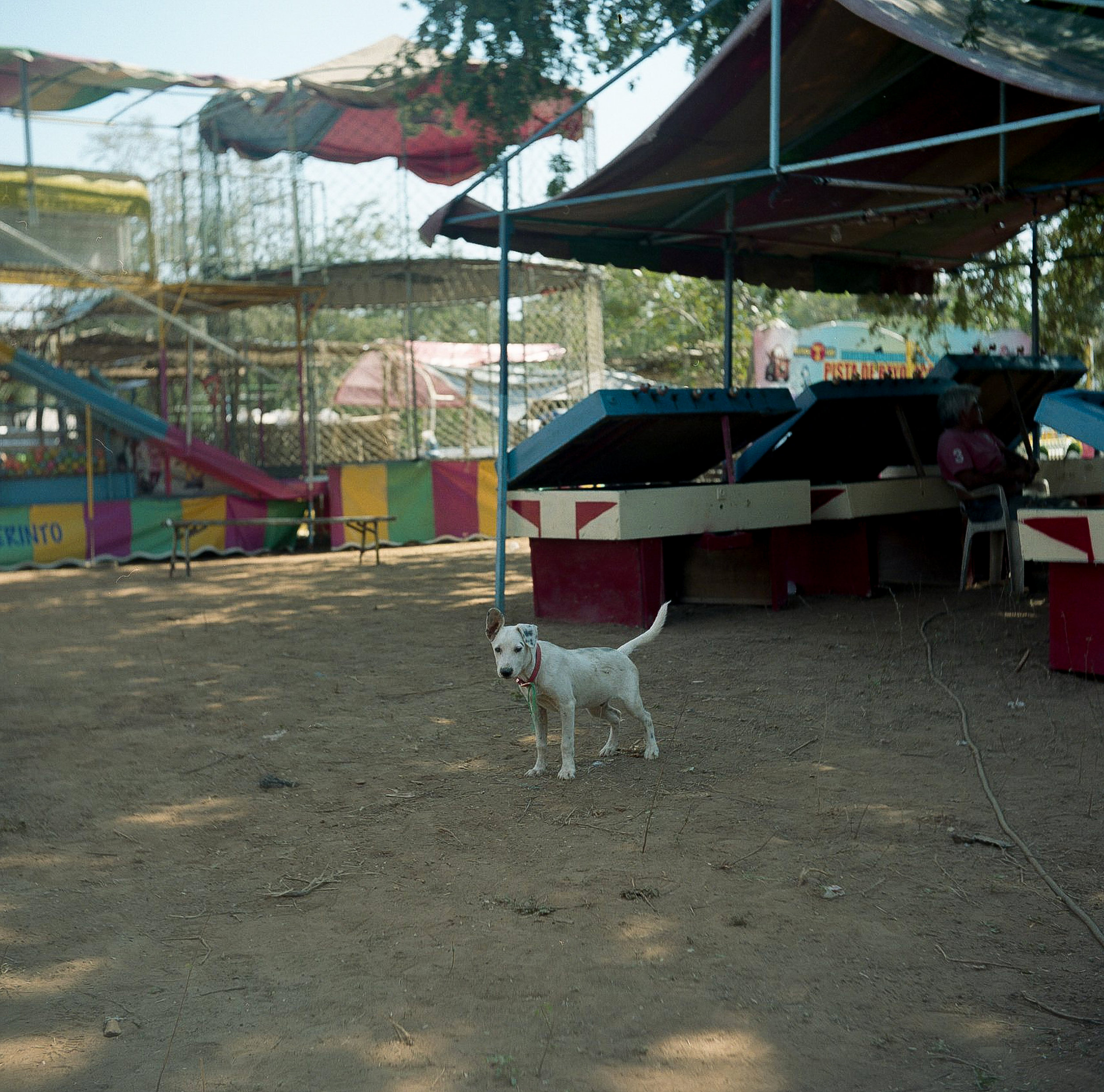 mexicanpup-1.jpg